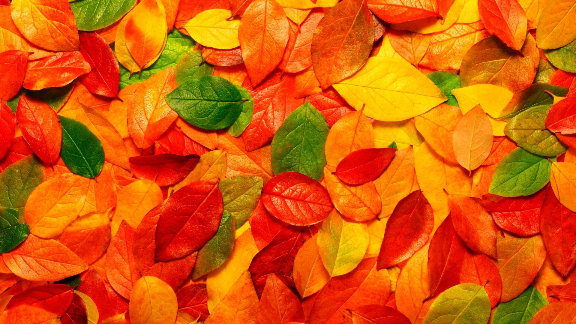Foliage Free Download Wallpaper