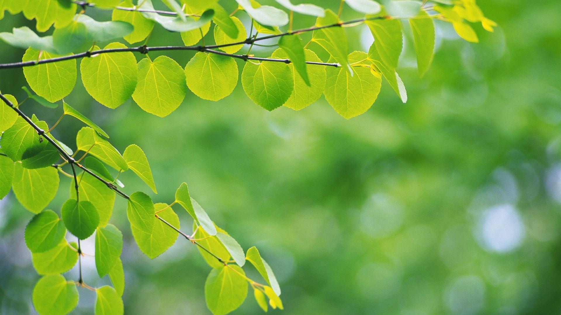 Foliage Wallpaper Theme