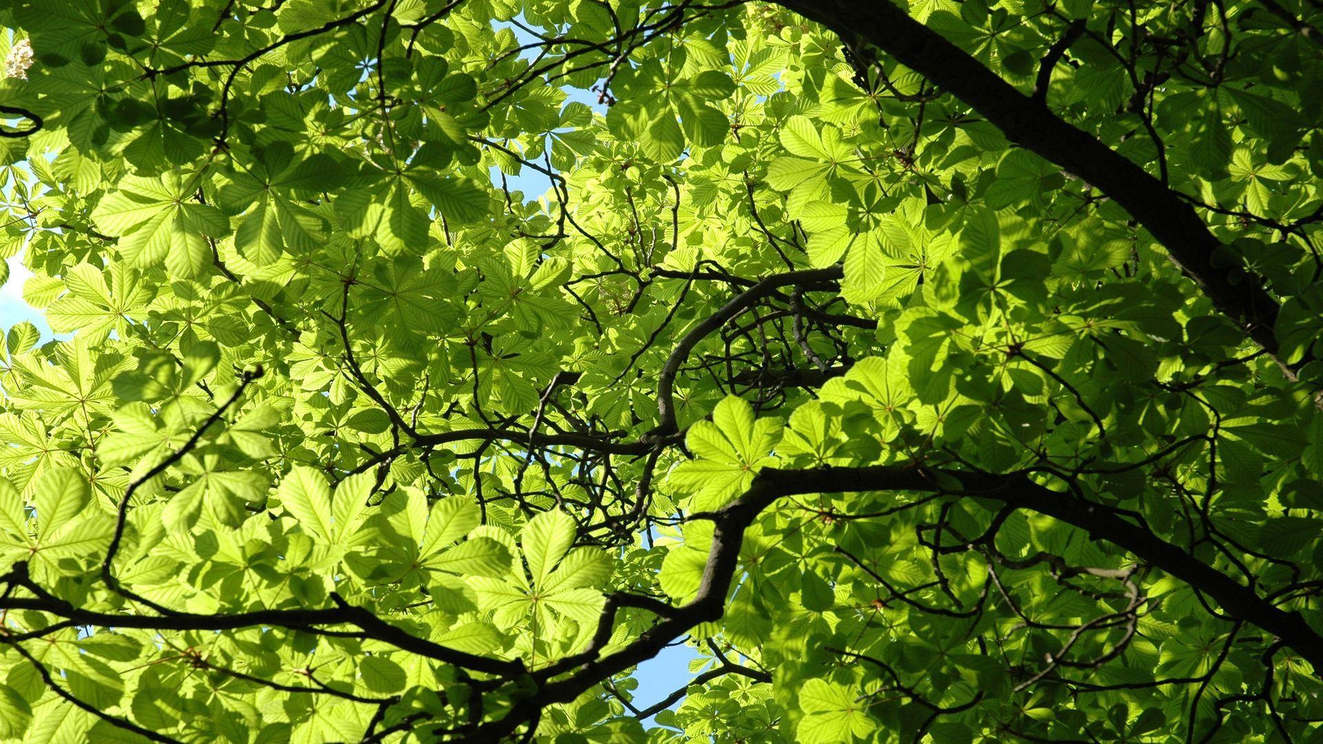 Foliage High Quality