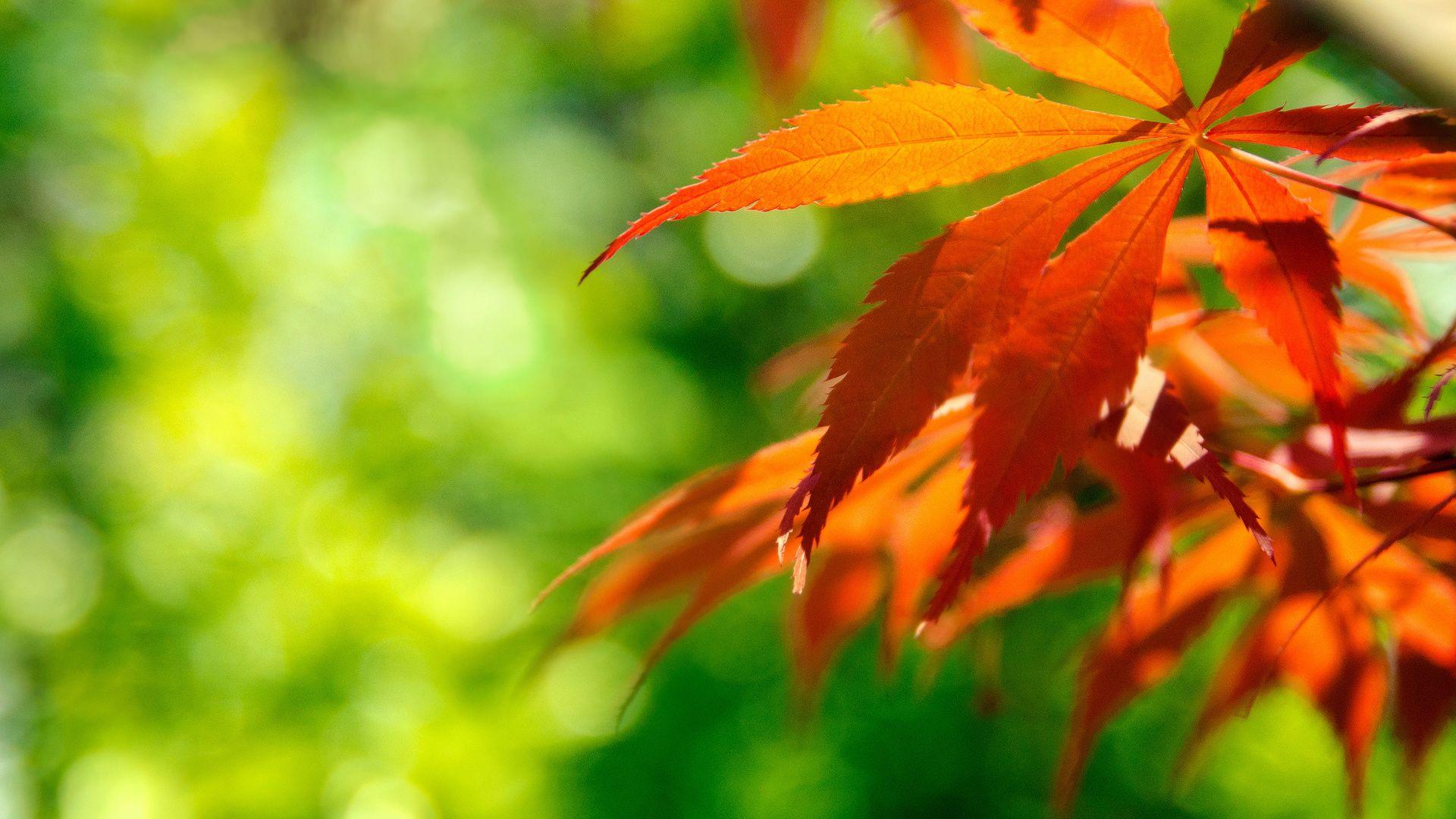 Foliage Cool HD Wallpaper