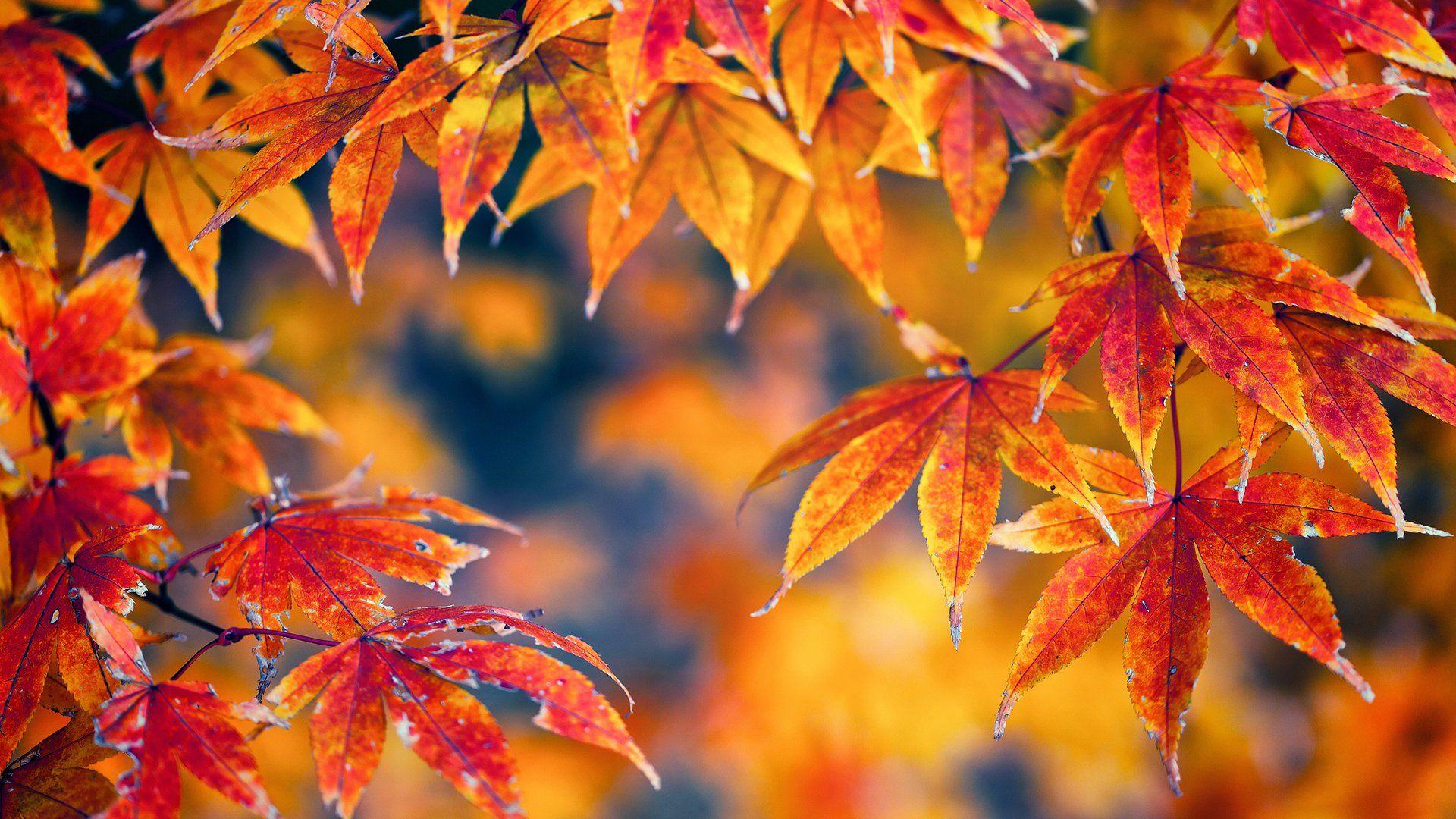 Foliage desktop wallpaper download