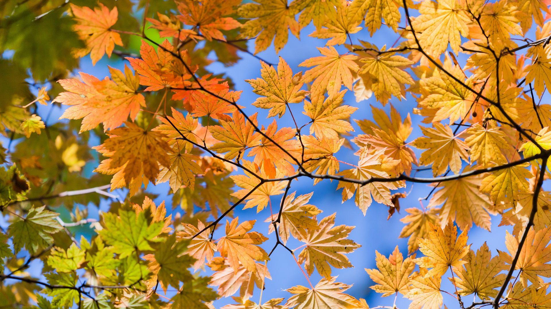 Foliage Desktop Wallpaper