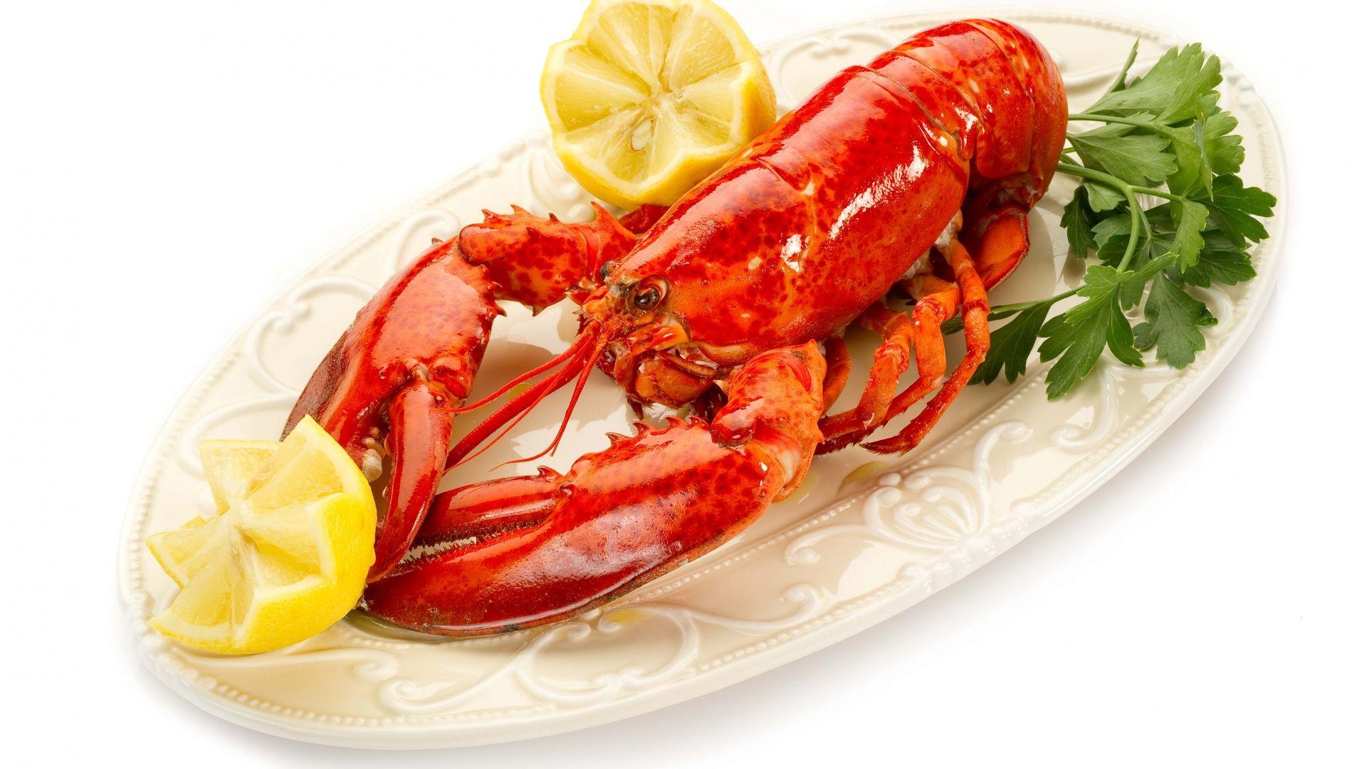 Lobster Background Wallpaper HD