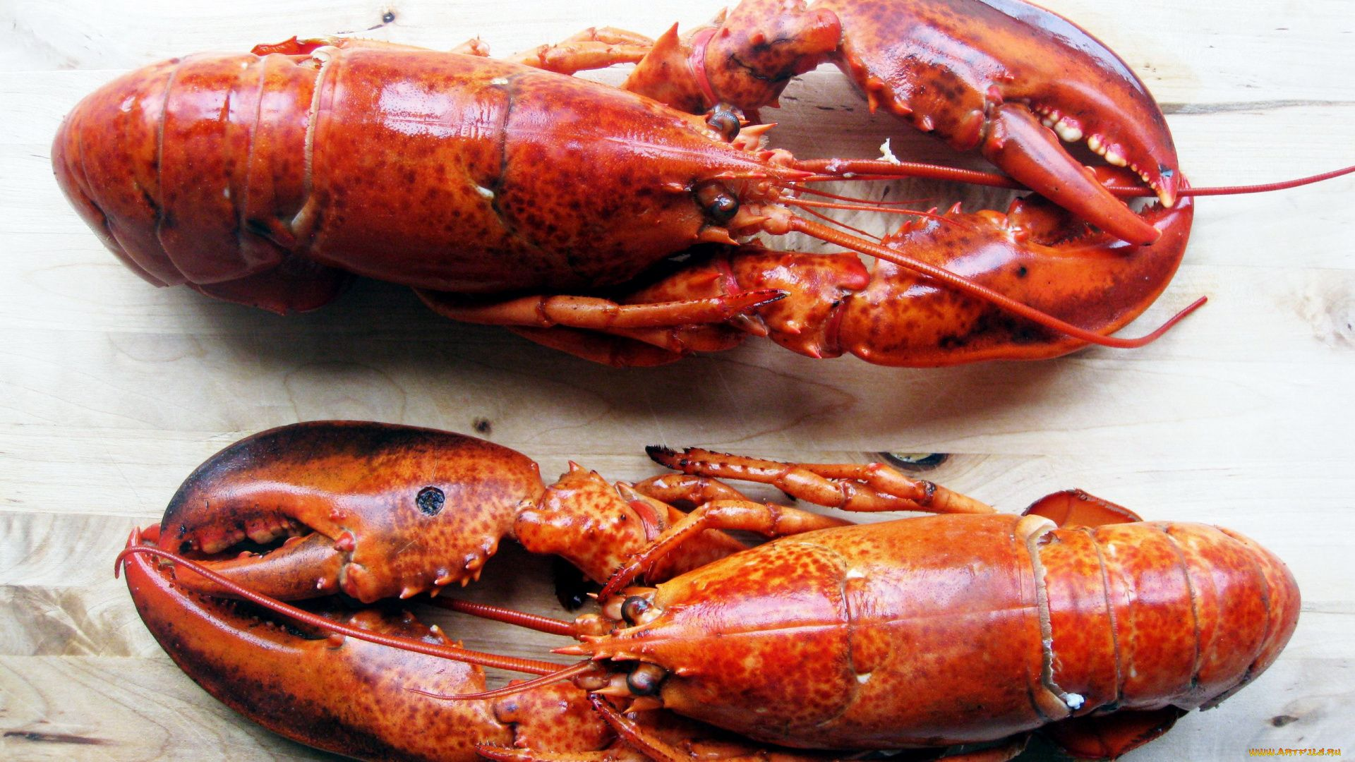 Lobster download nice wallpaper