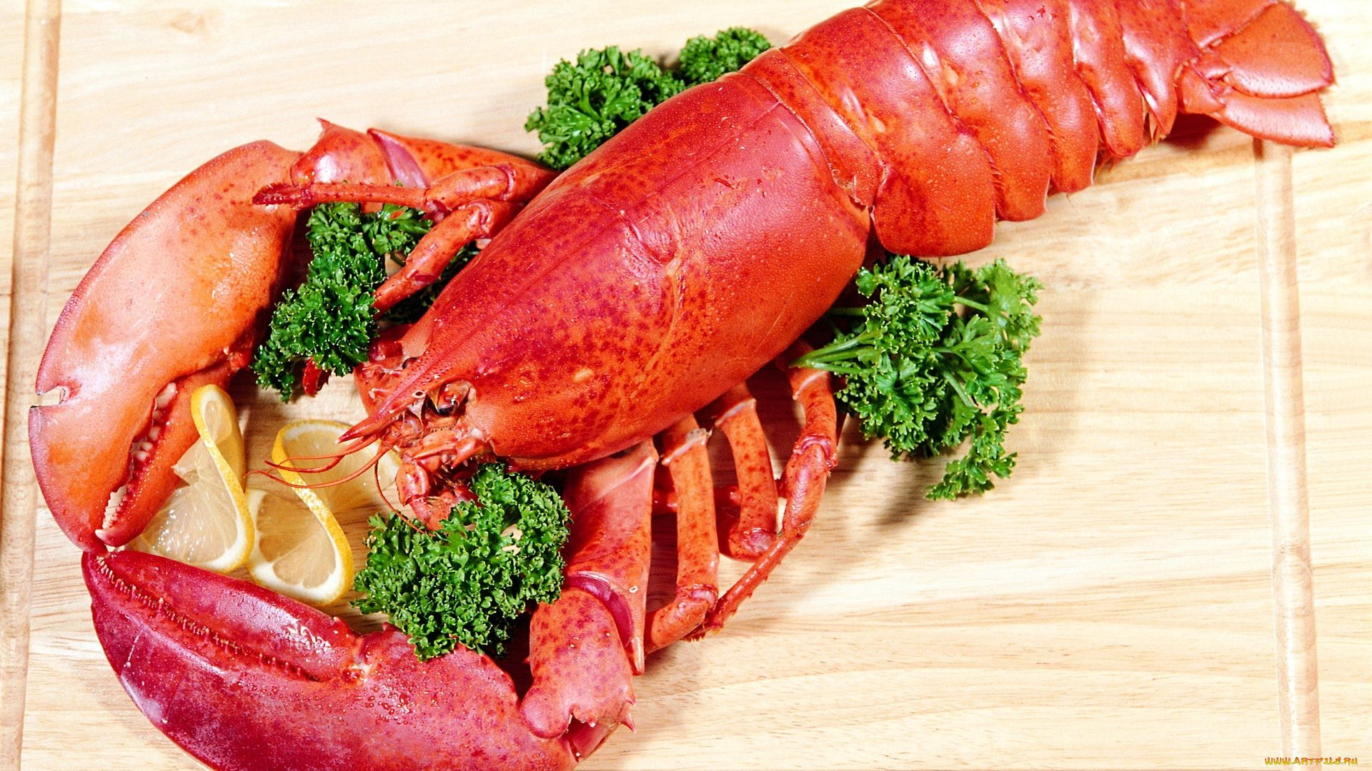 Lobster hd wallpaper 1080p for pc