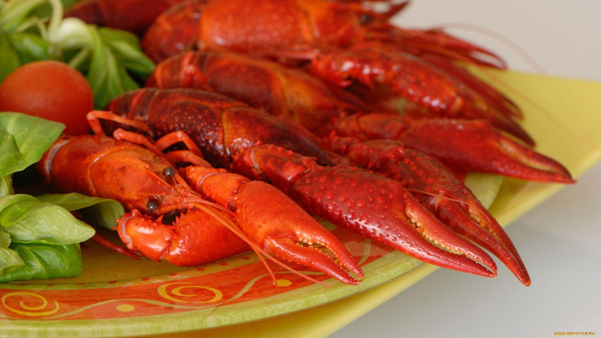 Lobster 1920x1080 wallpaper