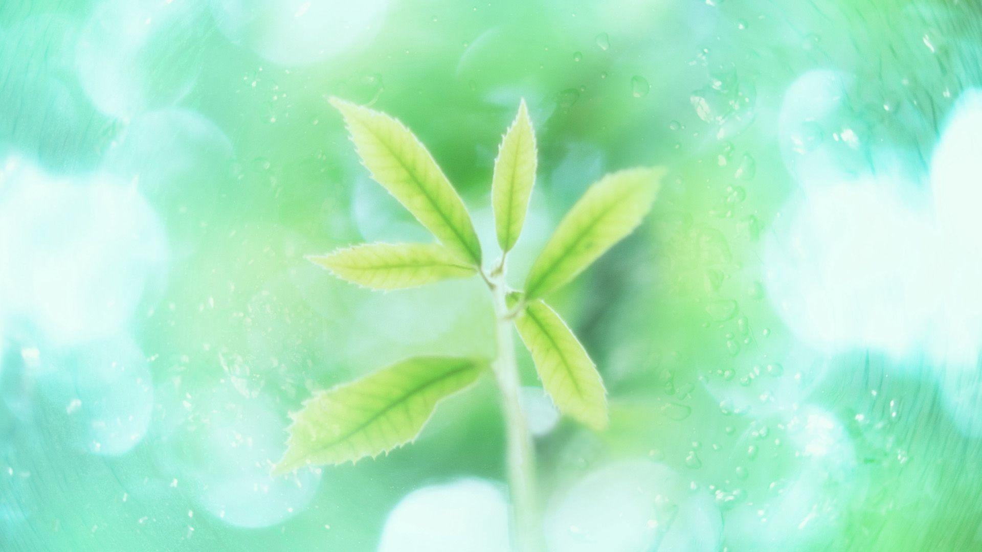 Mint Green free download wallpaper