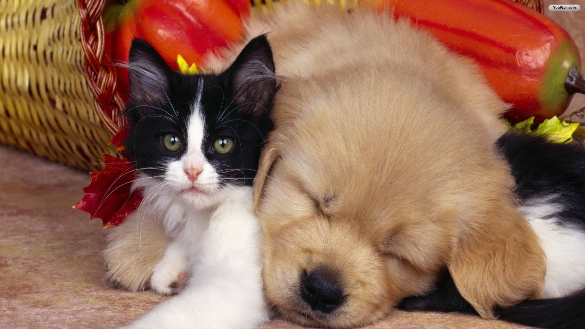 21 Puppy And Kitten Wallpapers Wallpaperboat