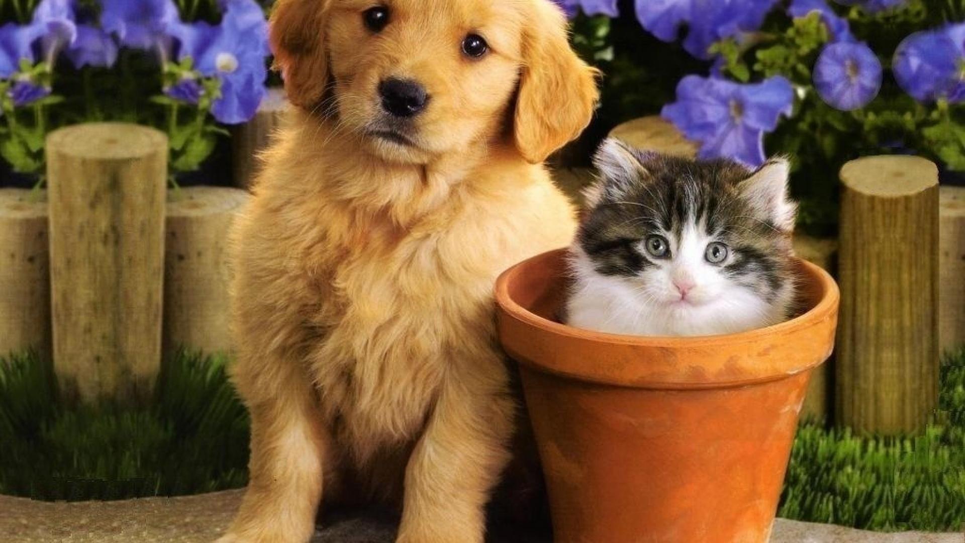Puppy And Kitten beautiful wallpaper