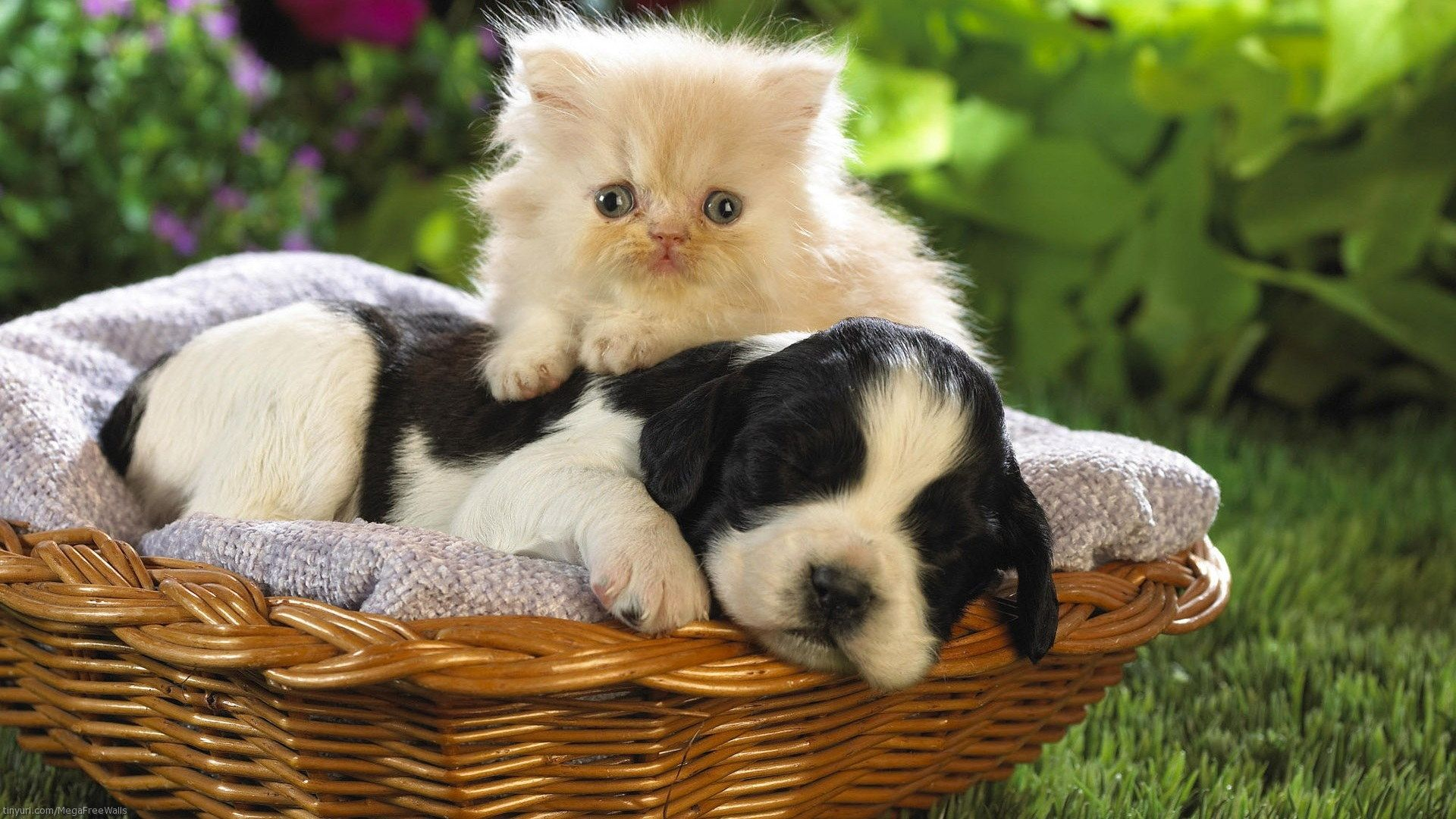Puppy And Kitten wallpaper download