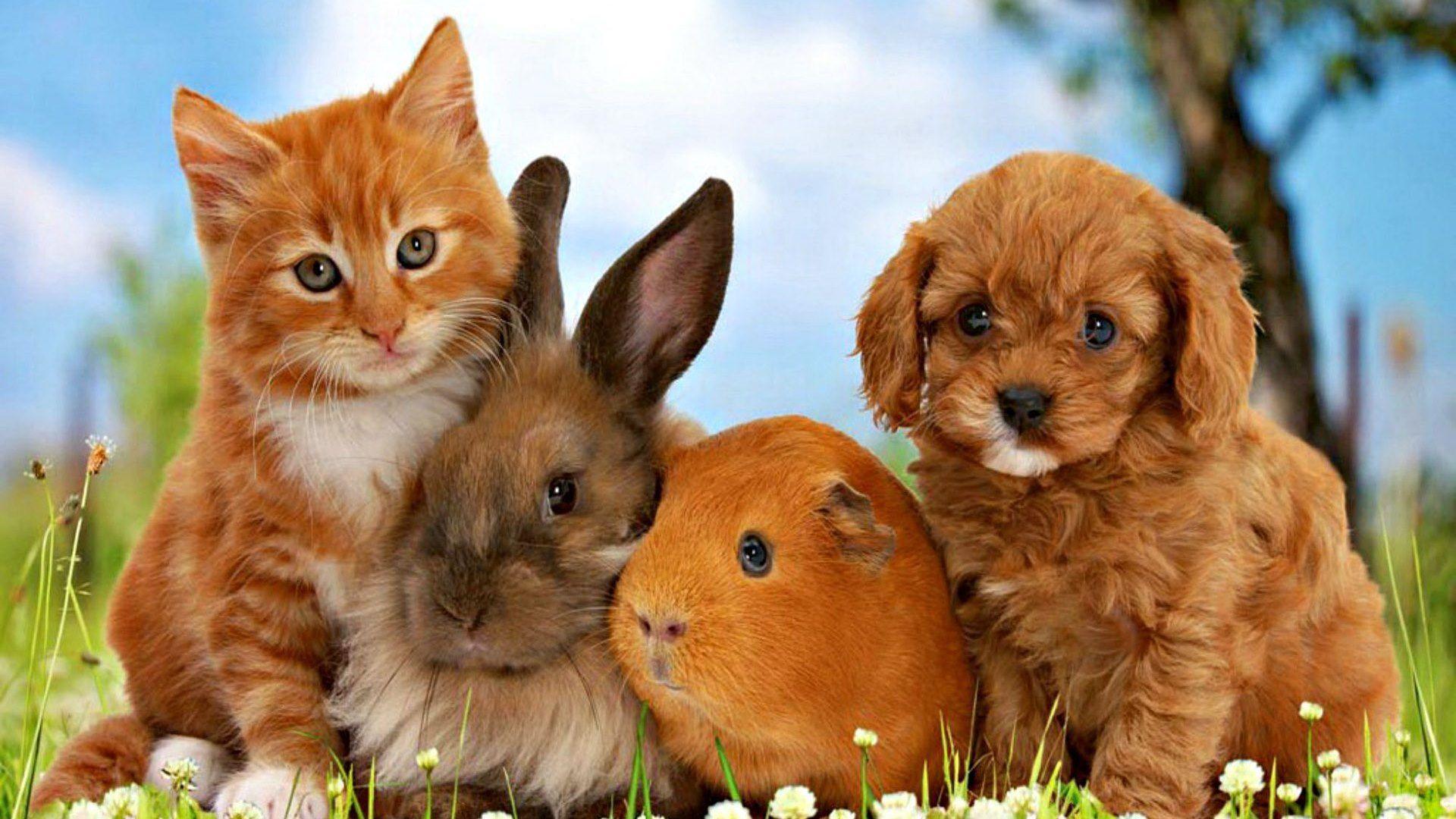 Puppy And Kitten free hd wallpaper
