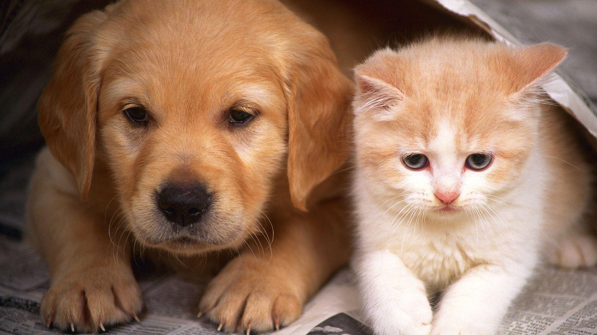 Puppy And Kitten laptop wallpaper