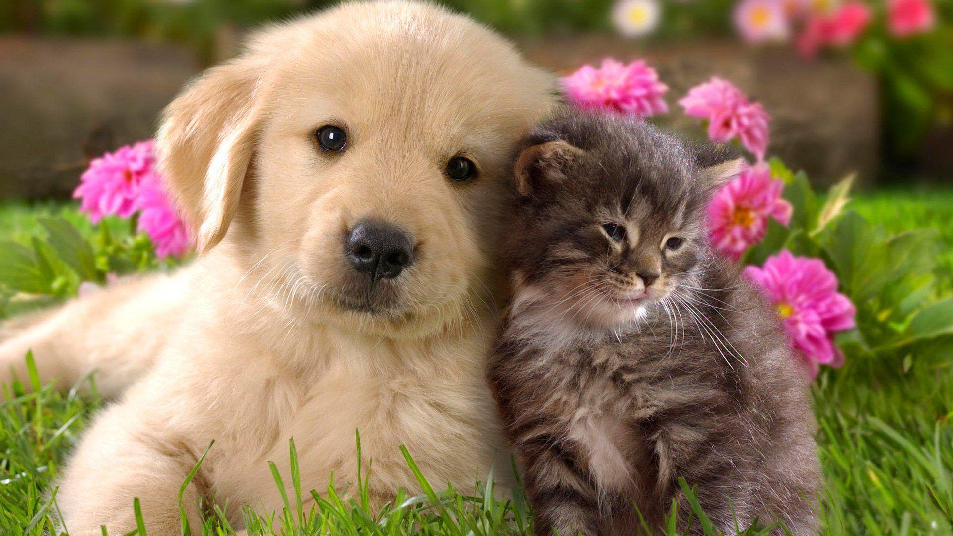 Puppy And Kitten PC Wallpaper HD