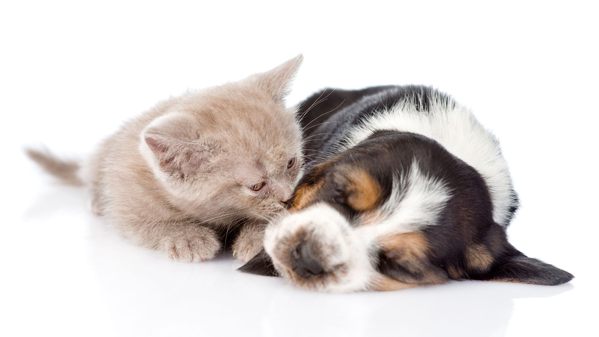 Puppy And Kitten free download wallpaper