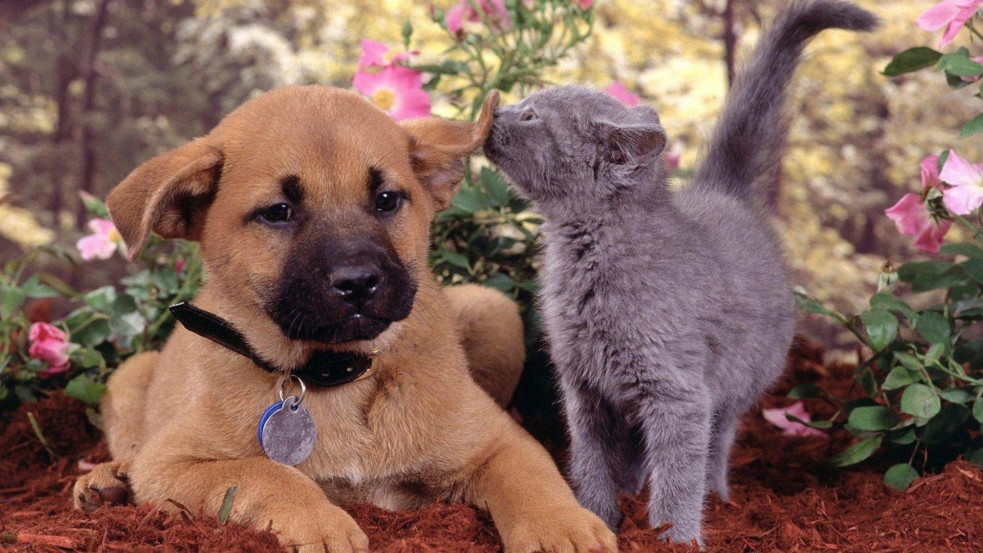 Puppy And Kitten Free Desktop Wallpaper