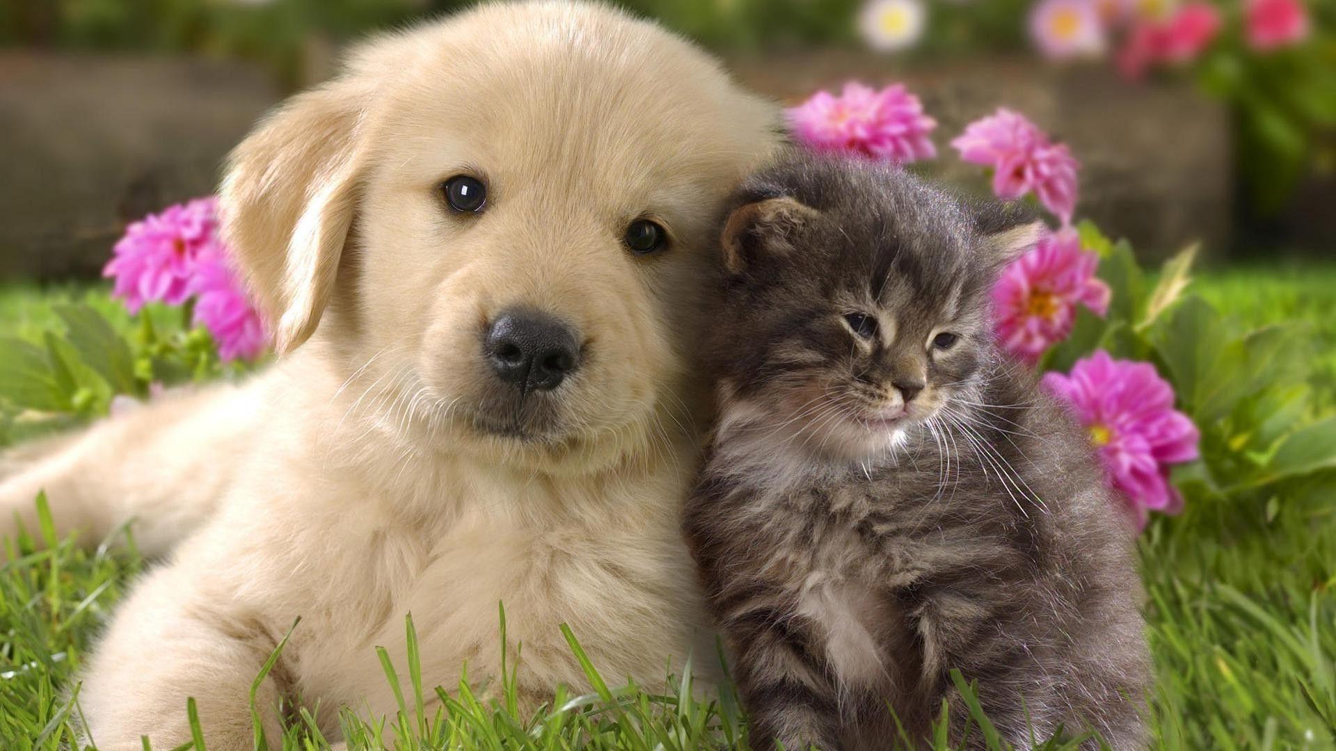 Puppy And Kitten HD Desktop Wallpaper