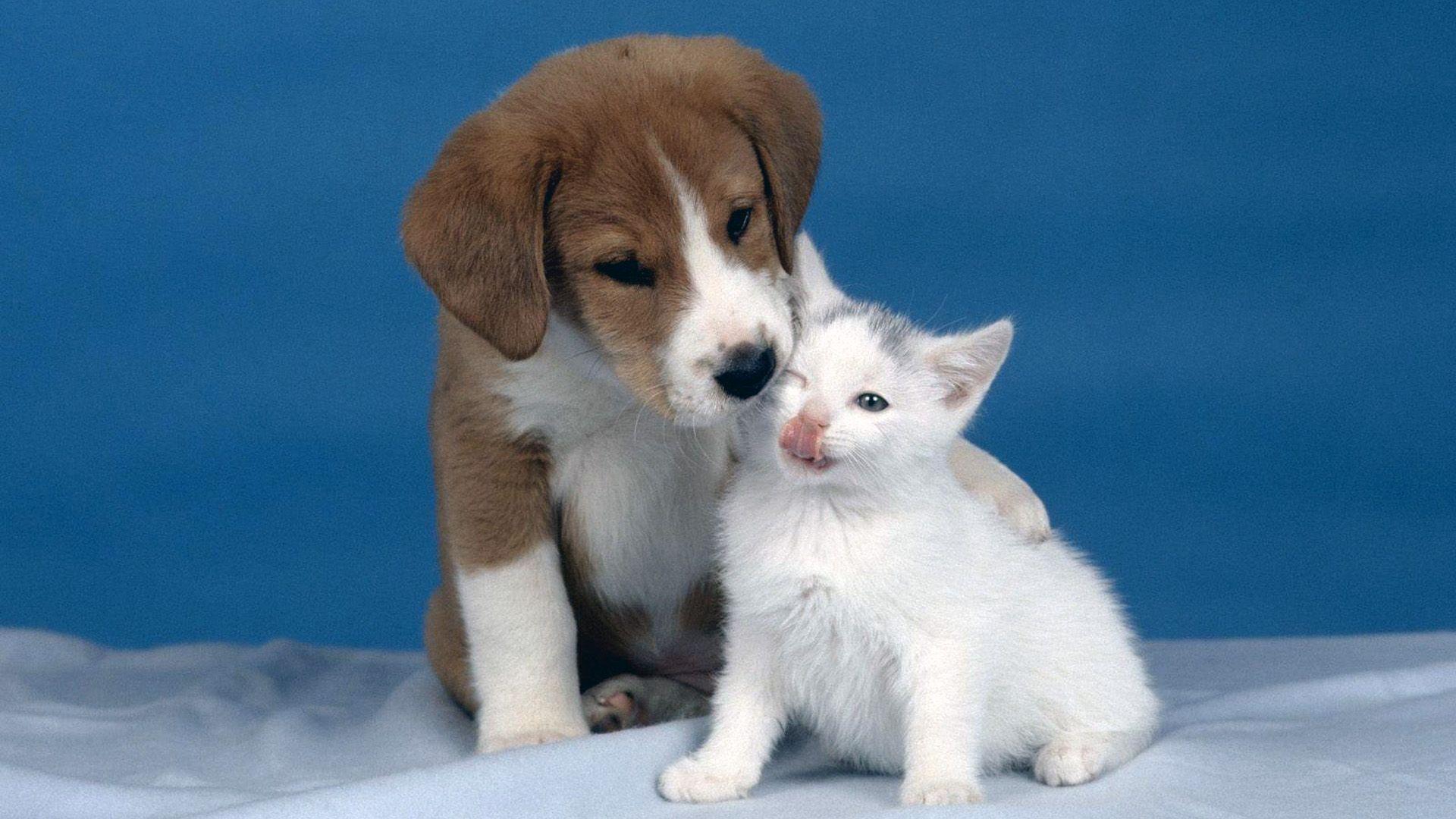 Puppy And Kitten full screen hd wallpaper