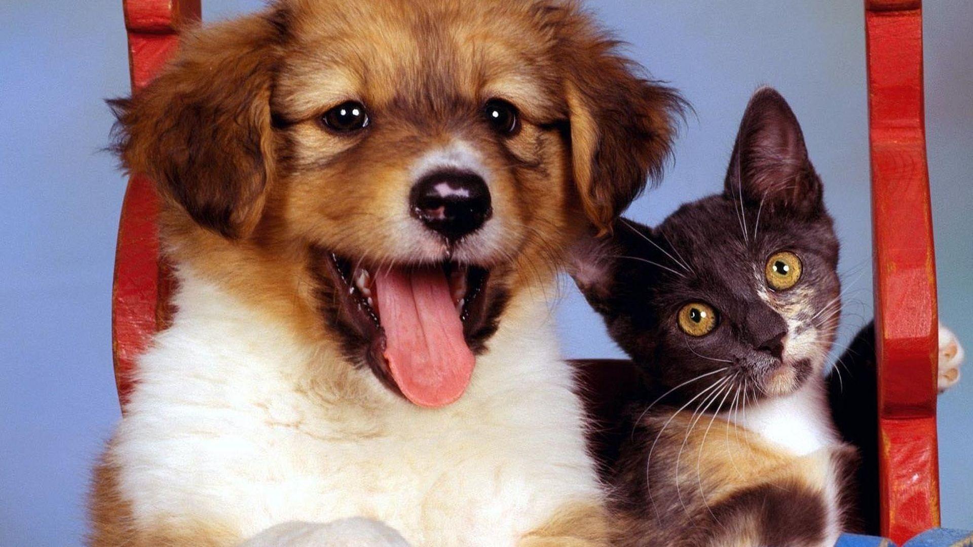 Puppy And Kitten background wallpaper