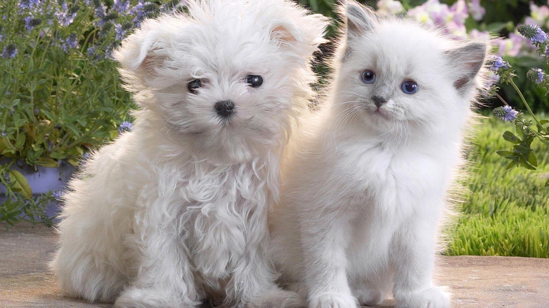 Puppy And Kitten good wallpaper
