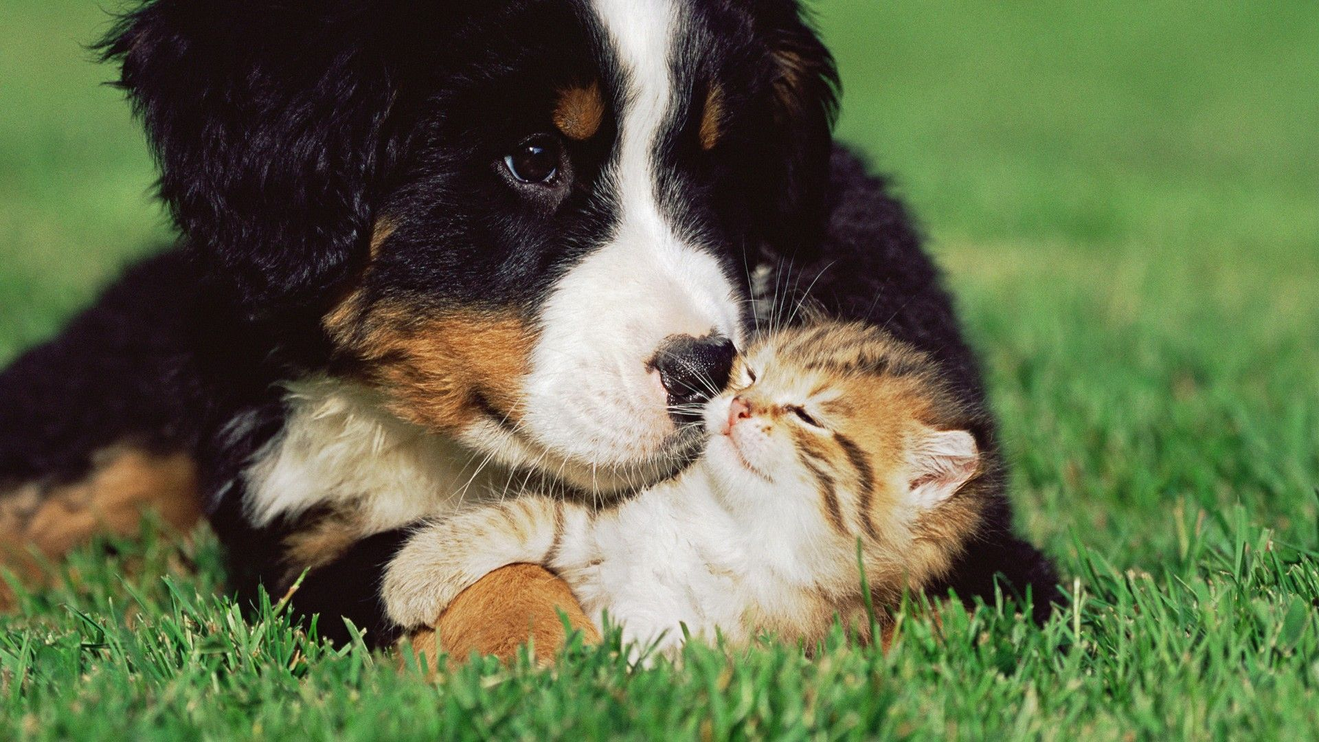 Puppy And Kitten wallpaper photo hd