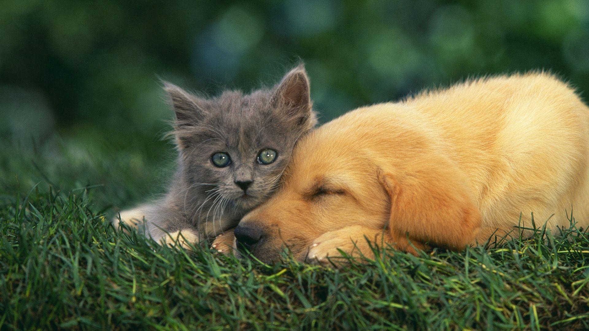 Puppy And Kitten PC Wallpaper