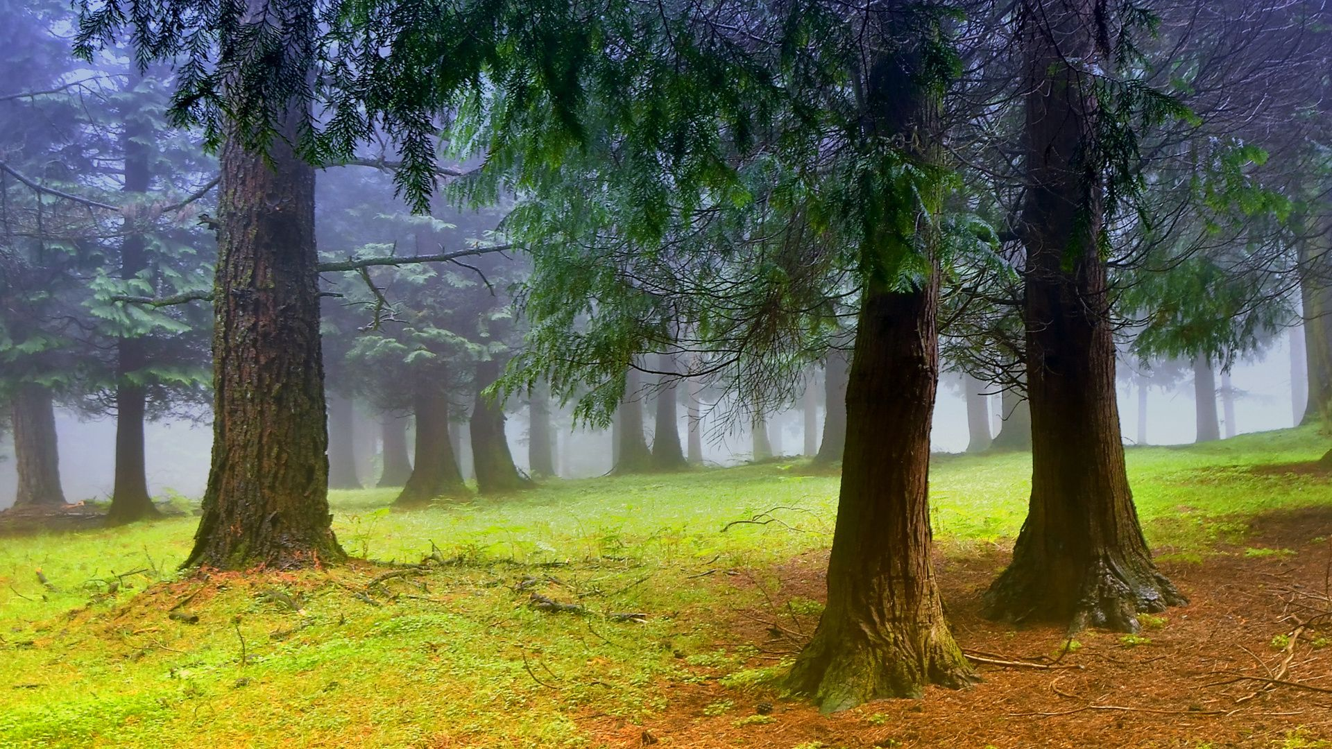 Trees Forest hd wallpaper for laptop