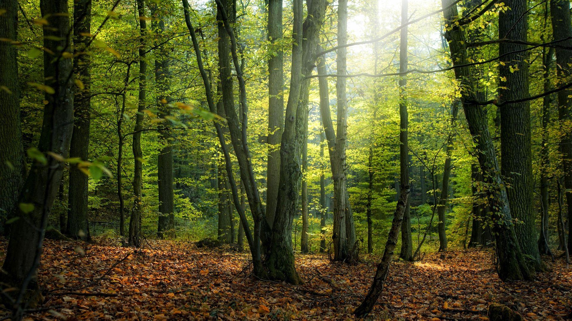 Trees Forest best Wallpaper