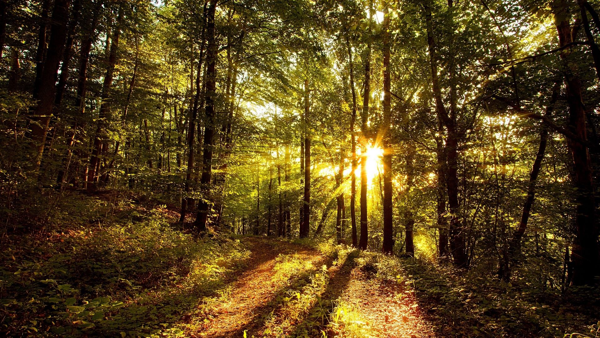 Trees Forest free download wallpaper