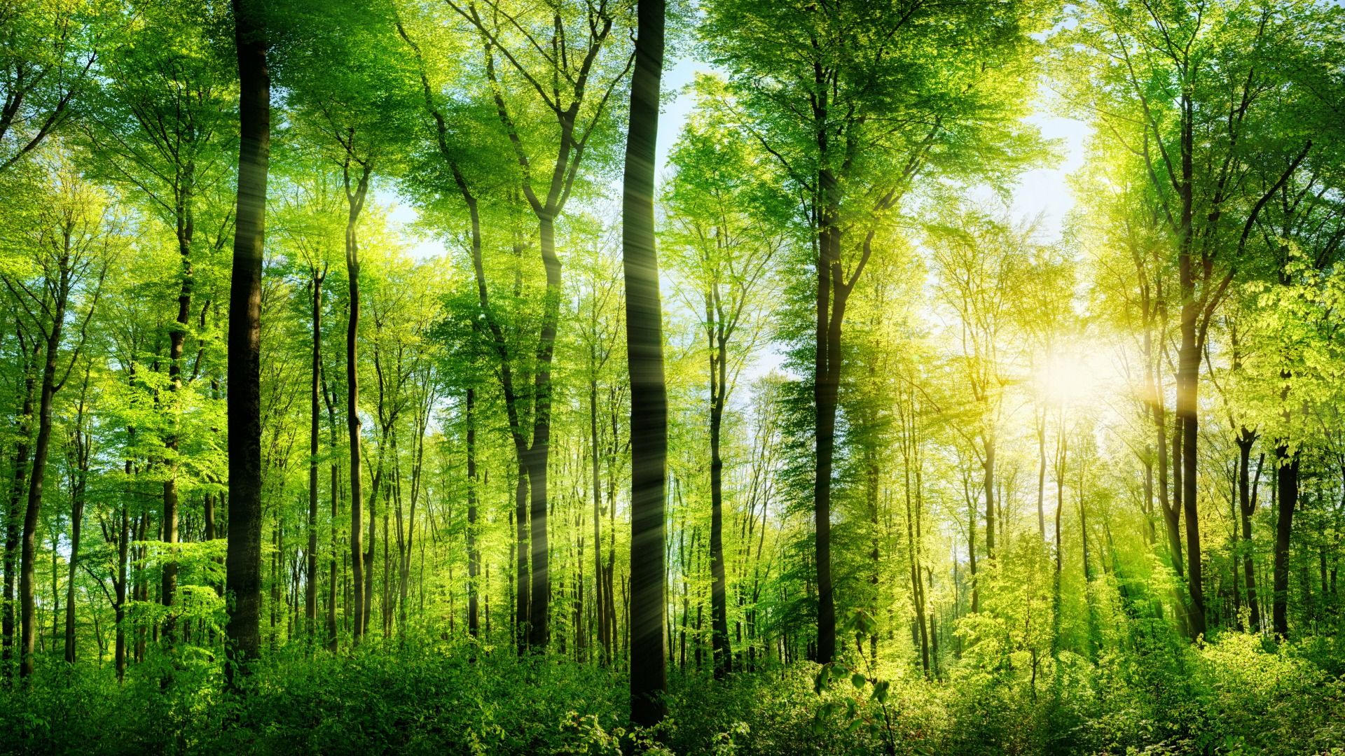 Trees Forest wallpaper image hd