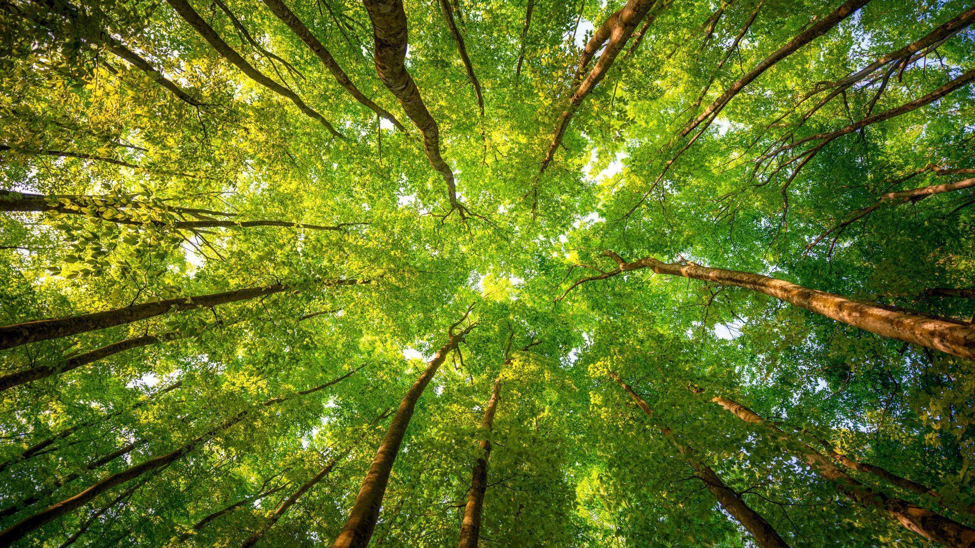 Trees Forest desktop wallpaper