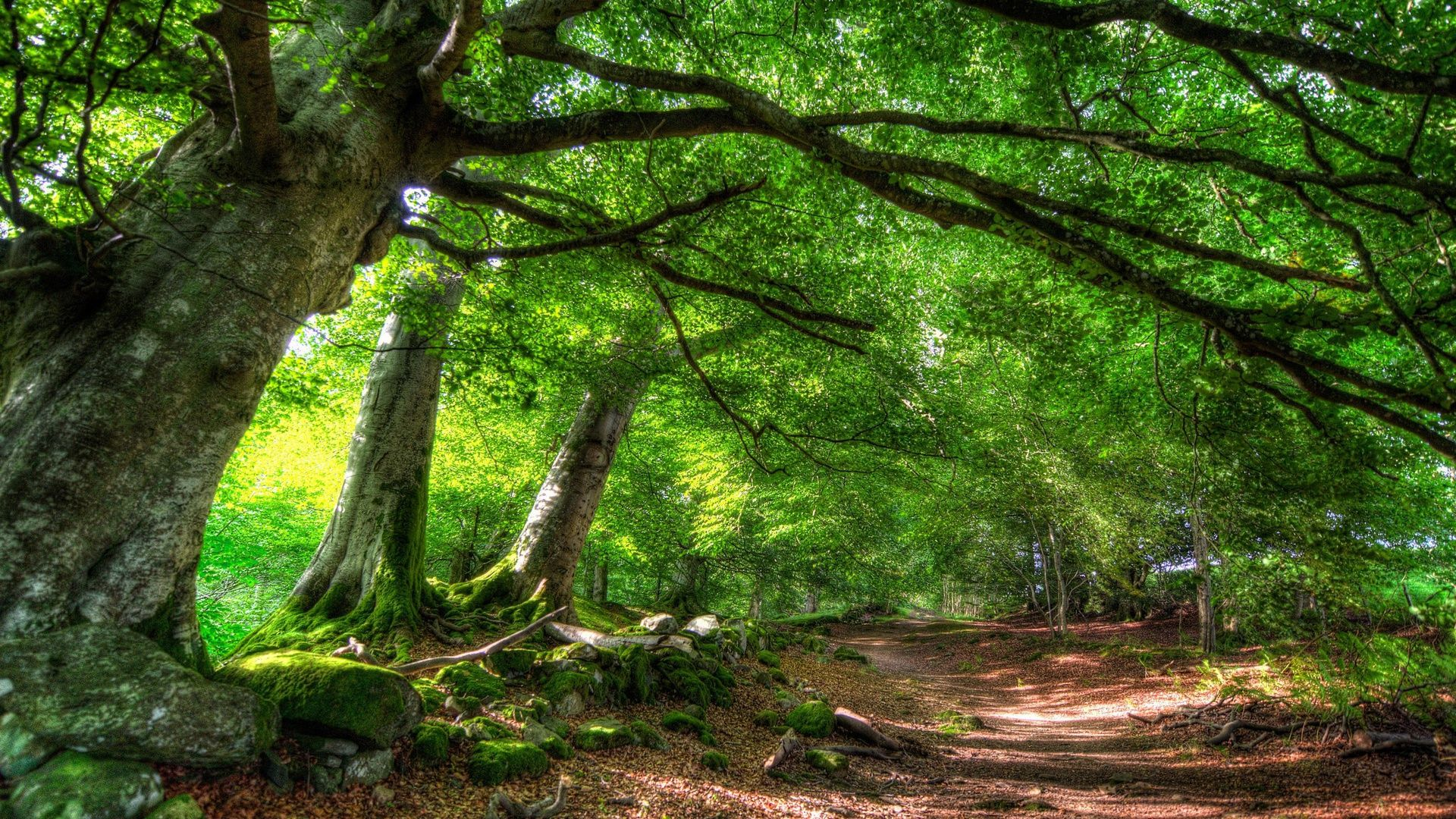 Trees Forest PC Wallpaper HD