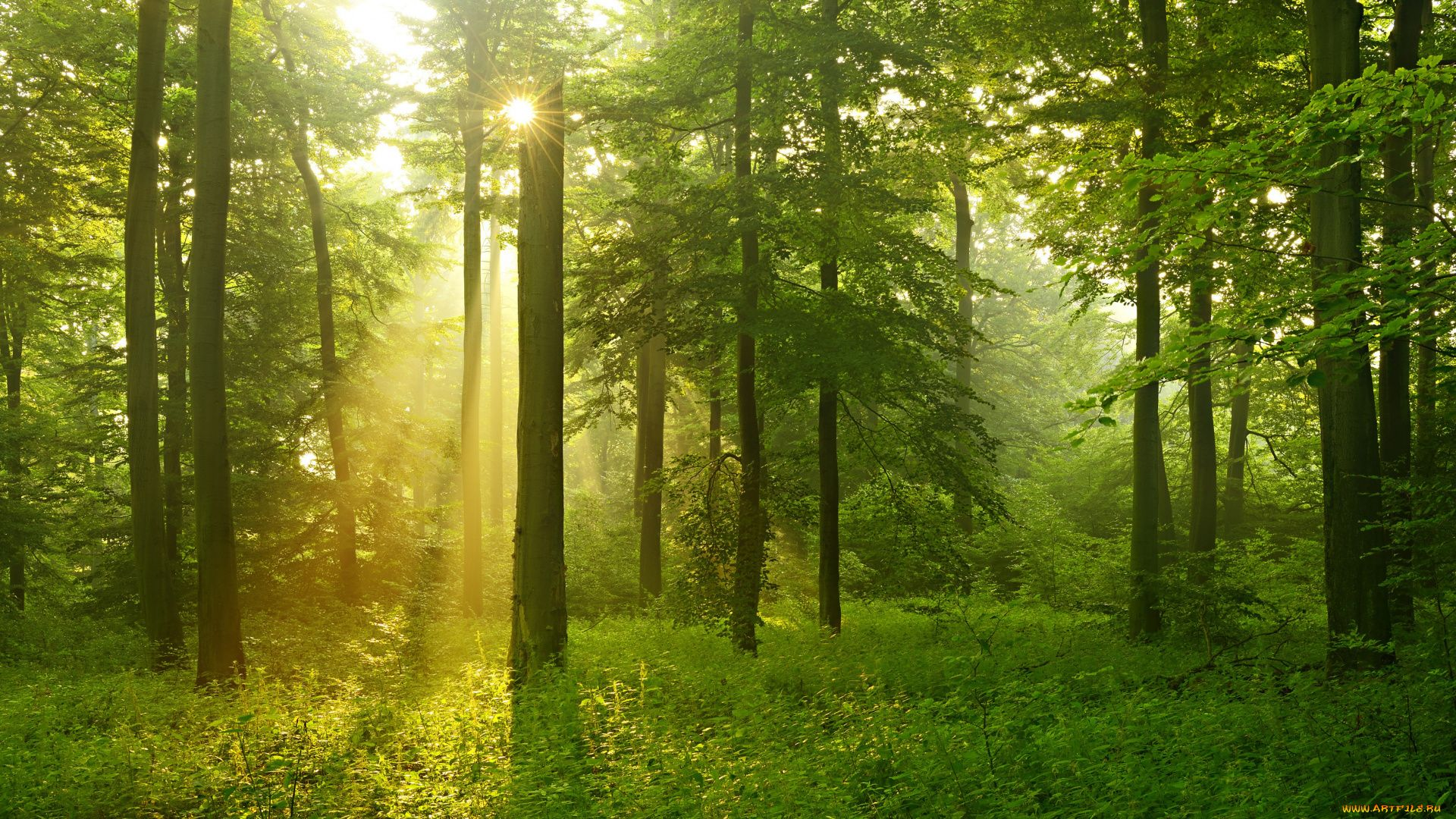 Trees Forest HD Download