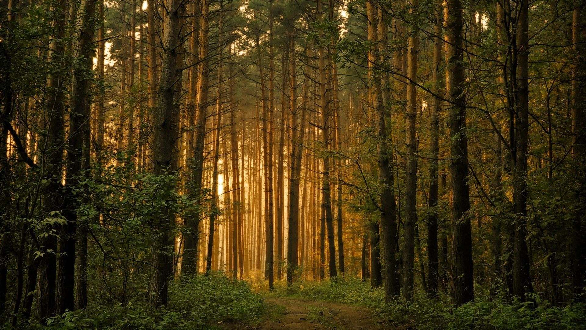 Trees Forest desktop wallpaper download