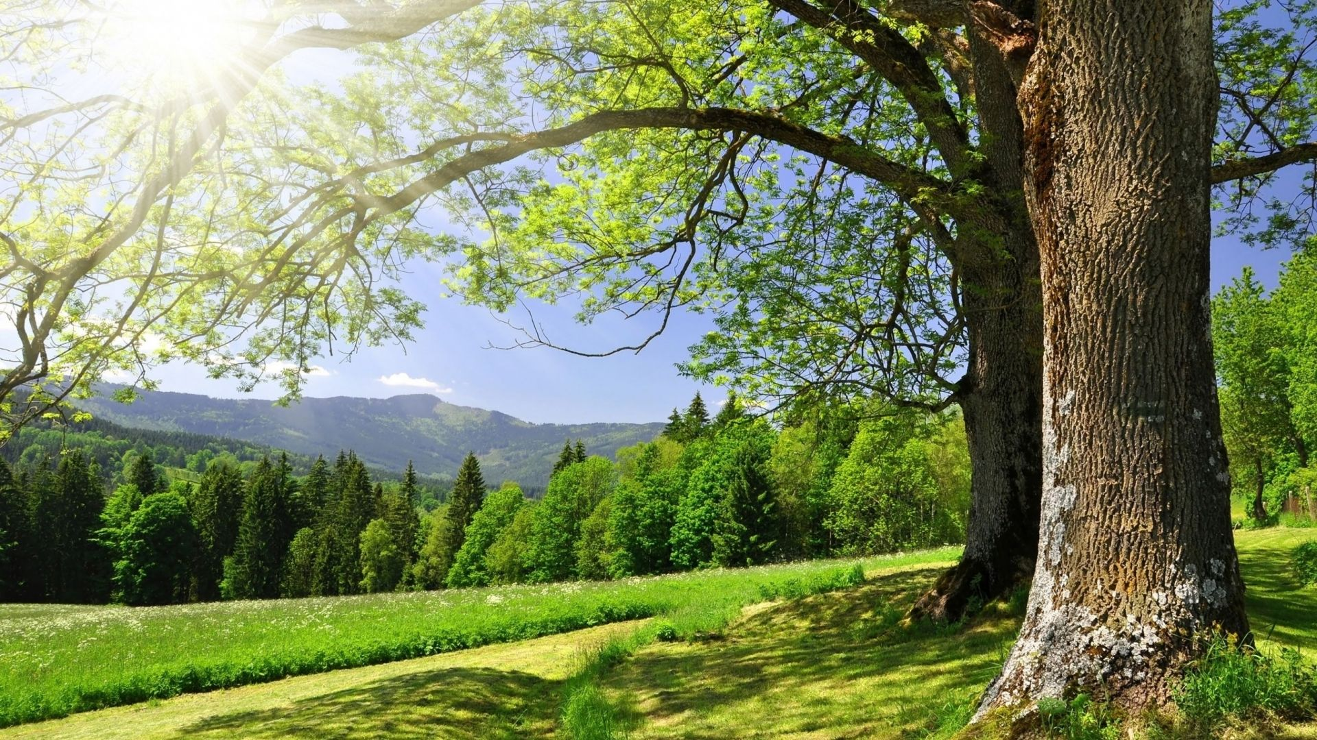 Trees Forest Cool Wallpaper