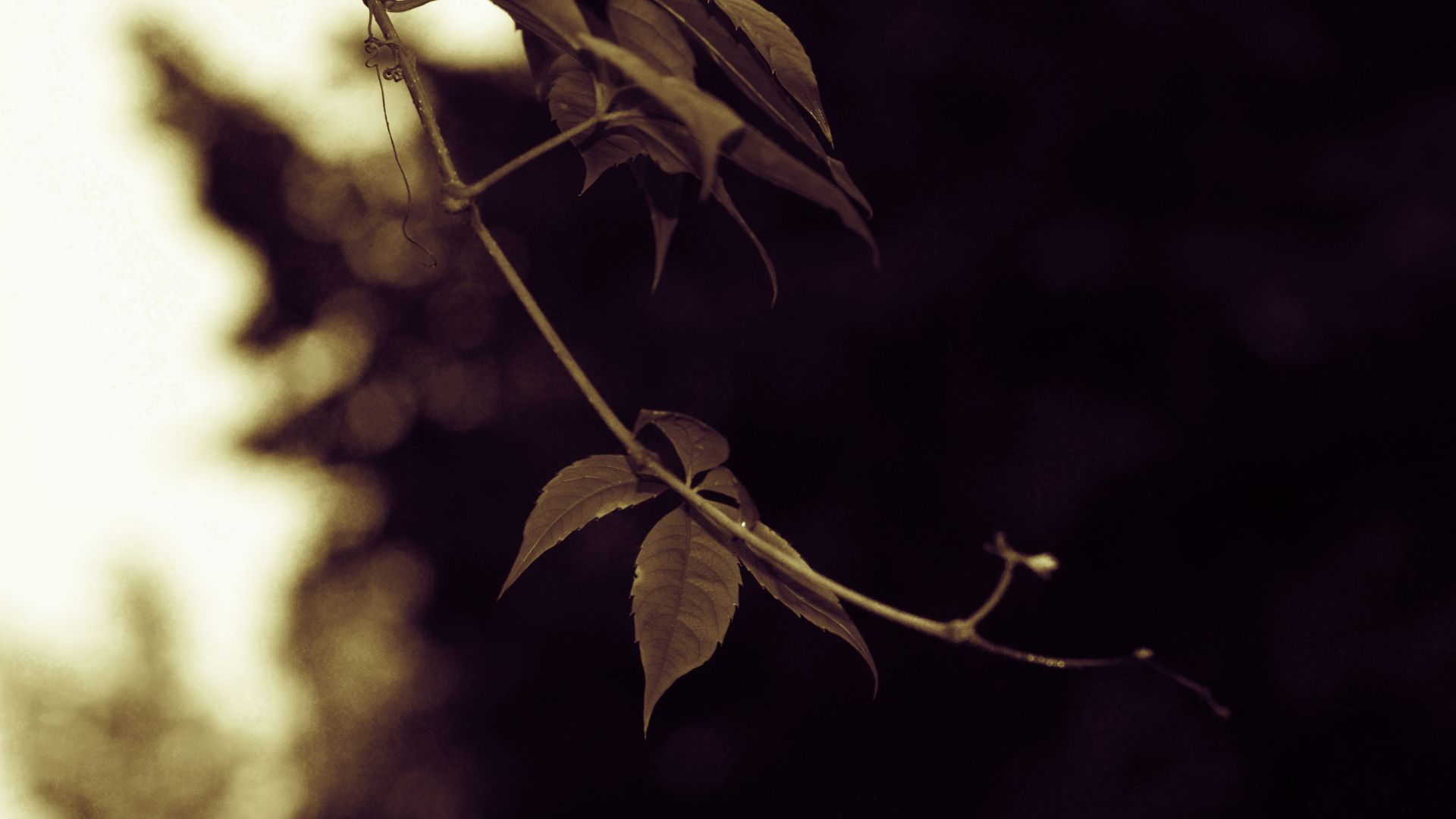 Twig wallpaper picture