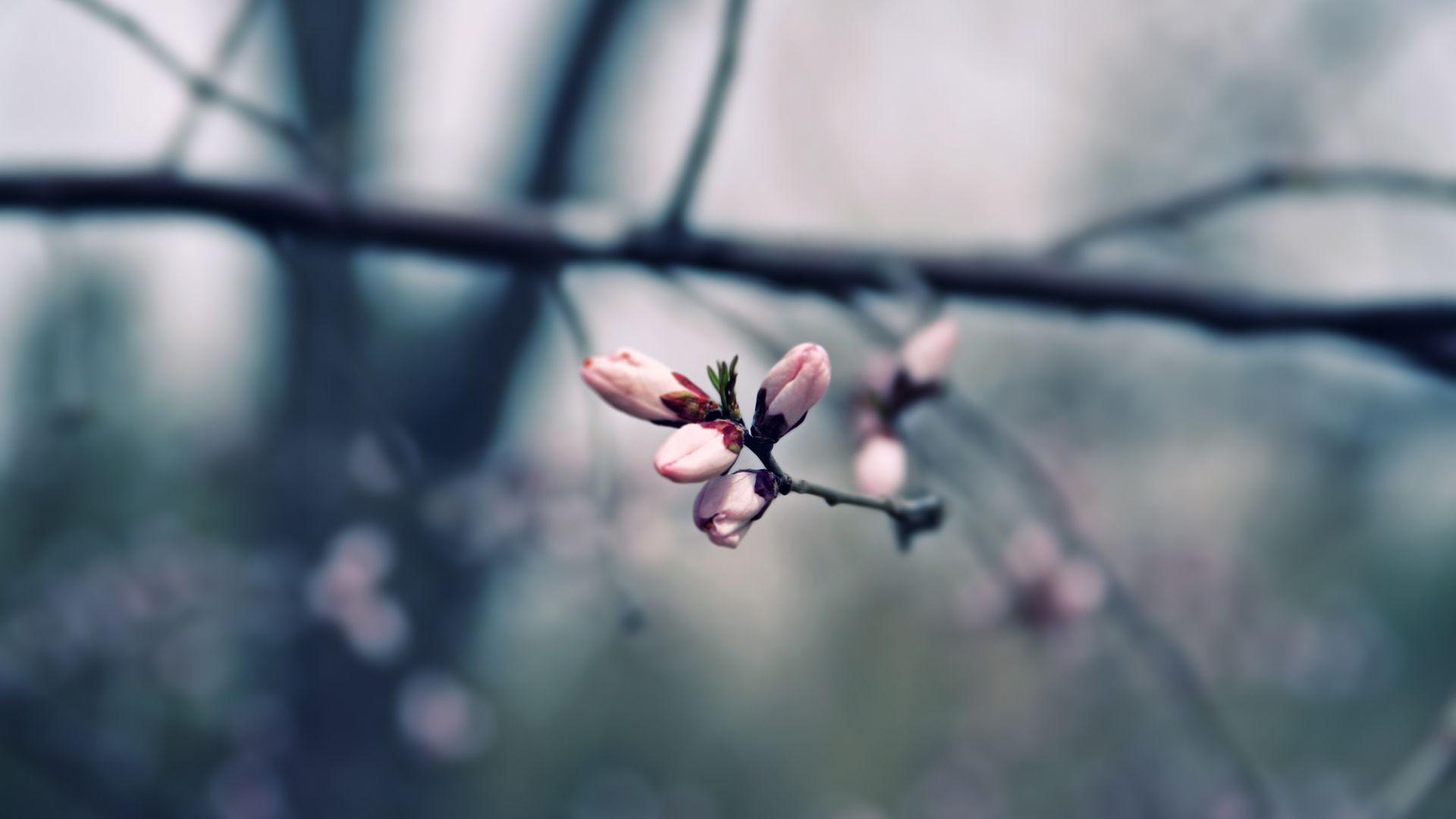 Twig image