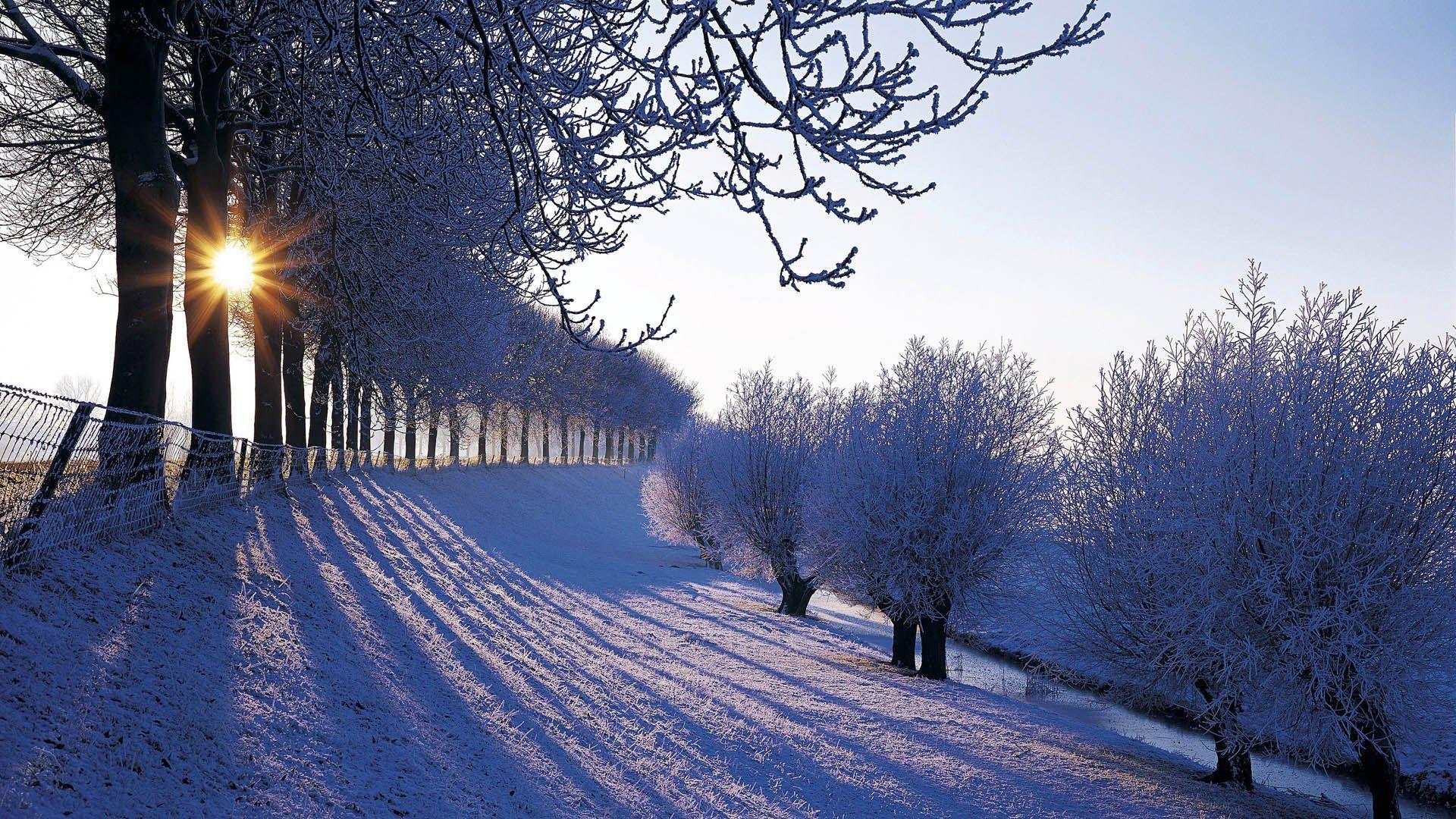 Winter Scene beautiful wallpaper