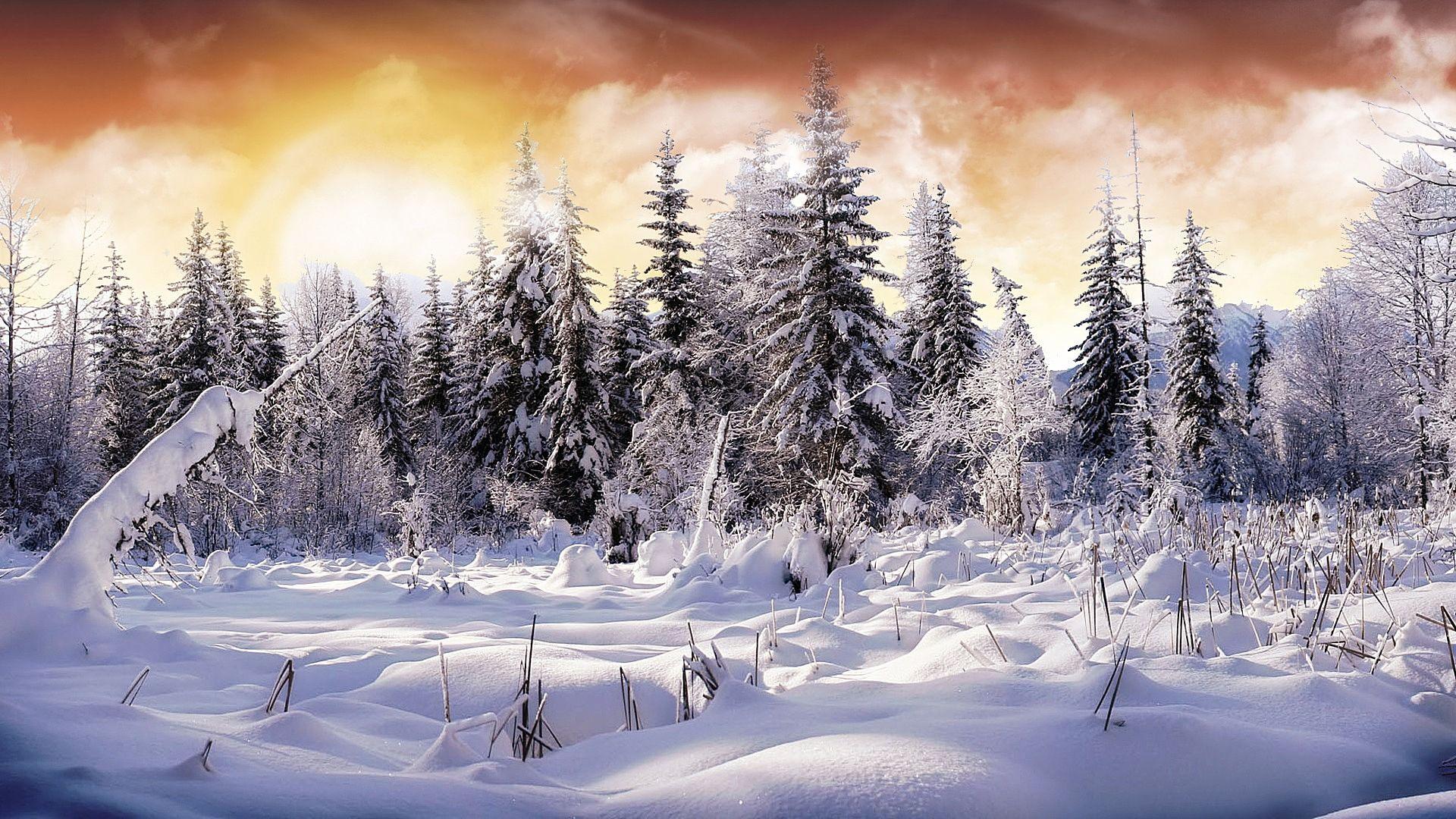 Winter Scene wallpaper download