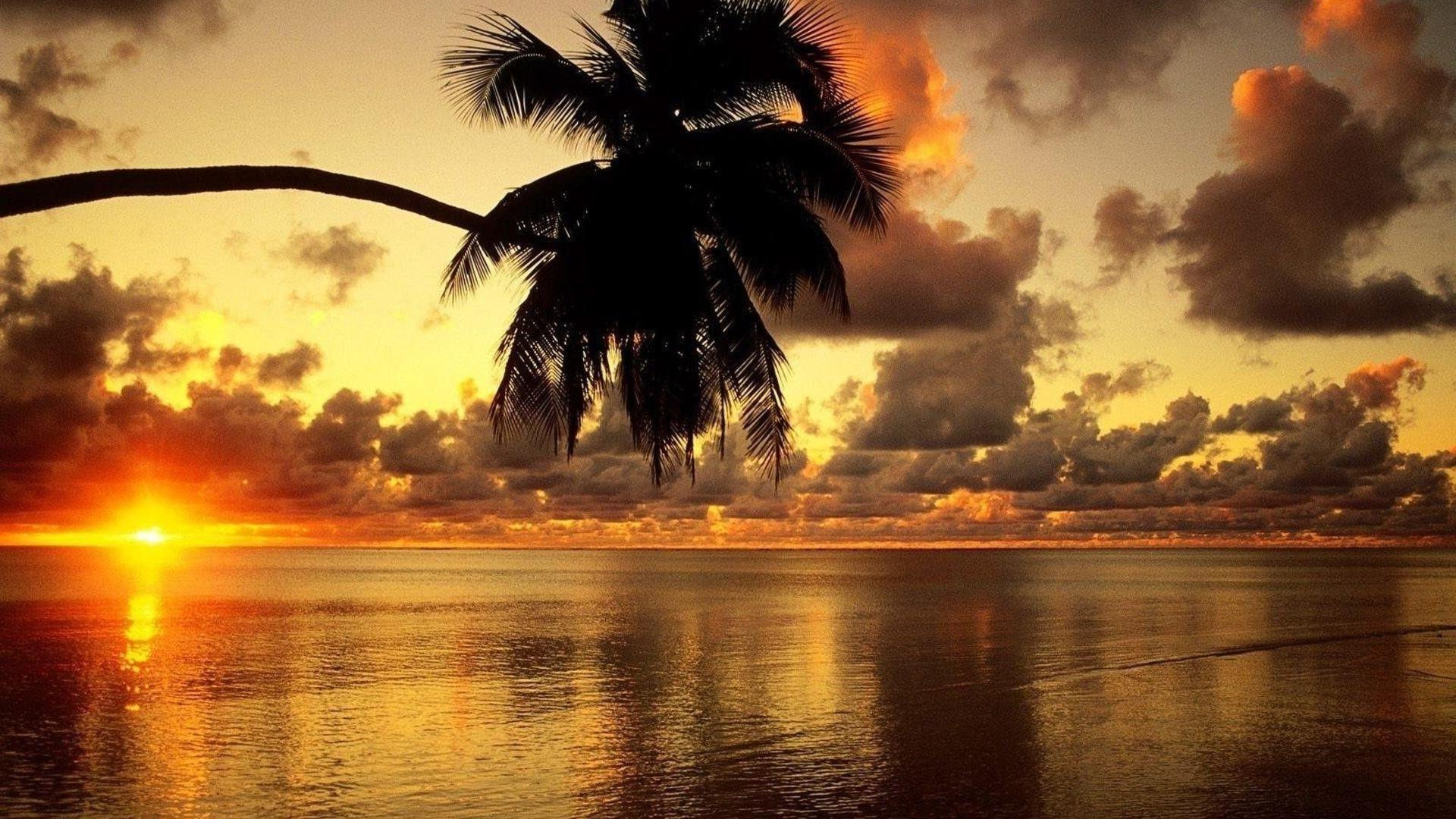 Aloha Wallpaper Image