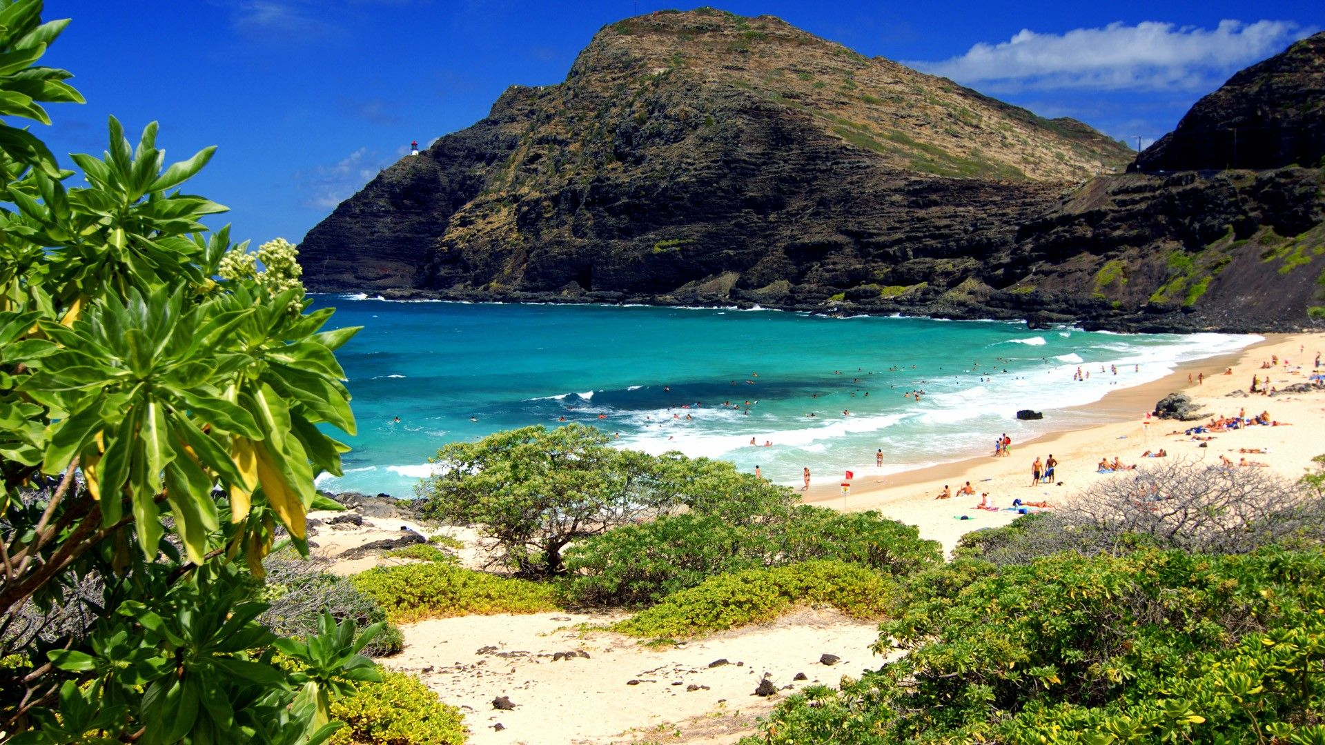 Aloha Pic