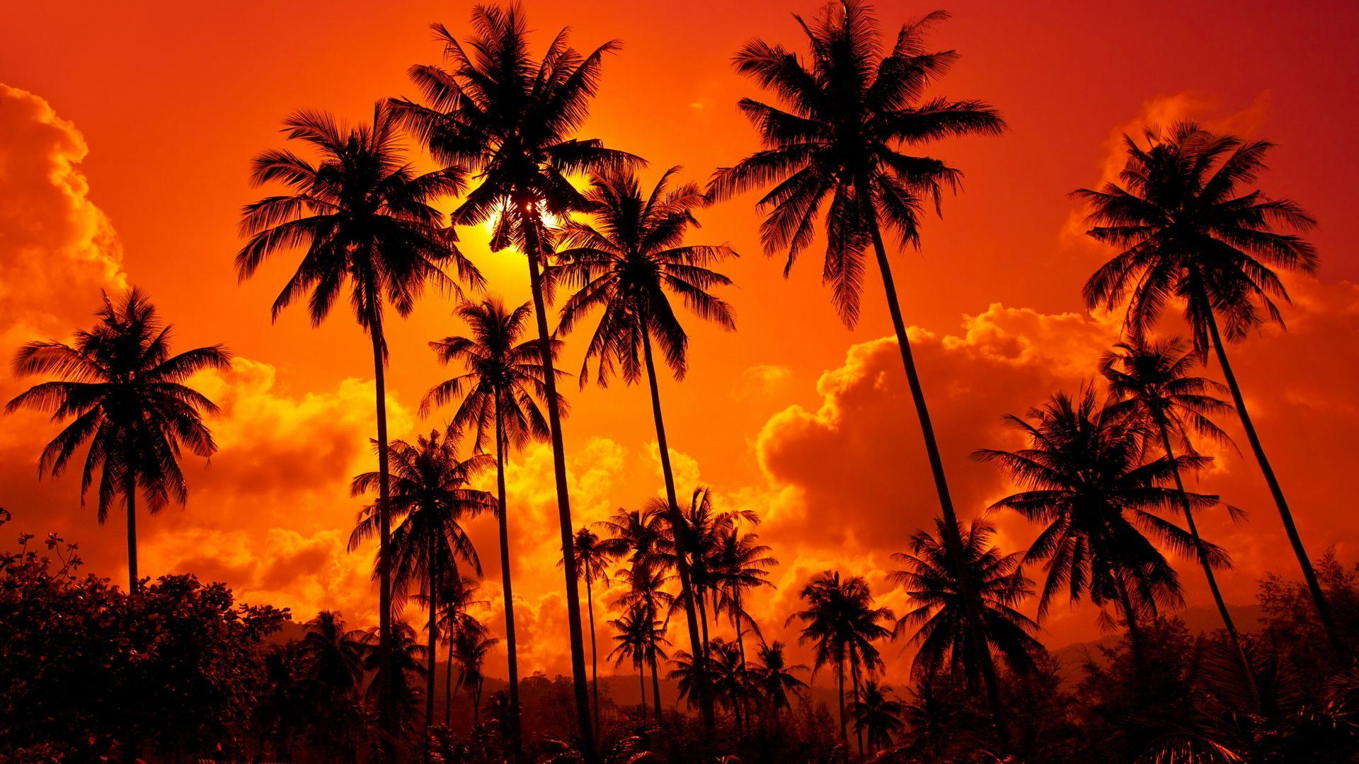 Aloha desktop wallpaper download