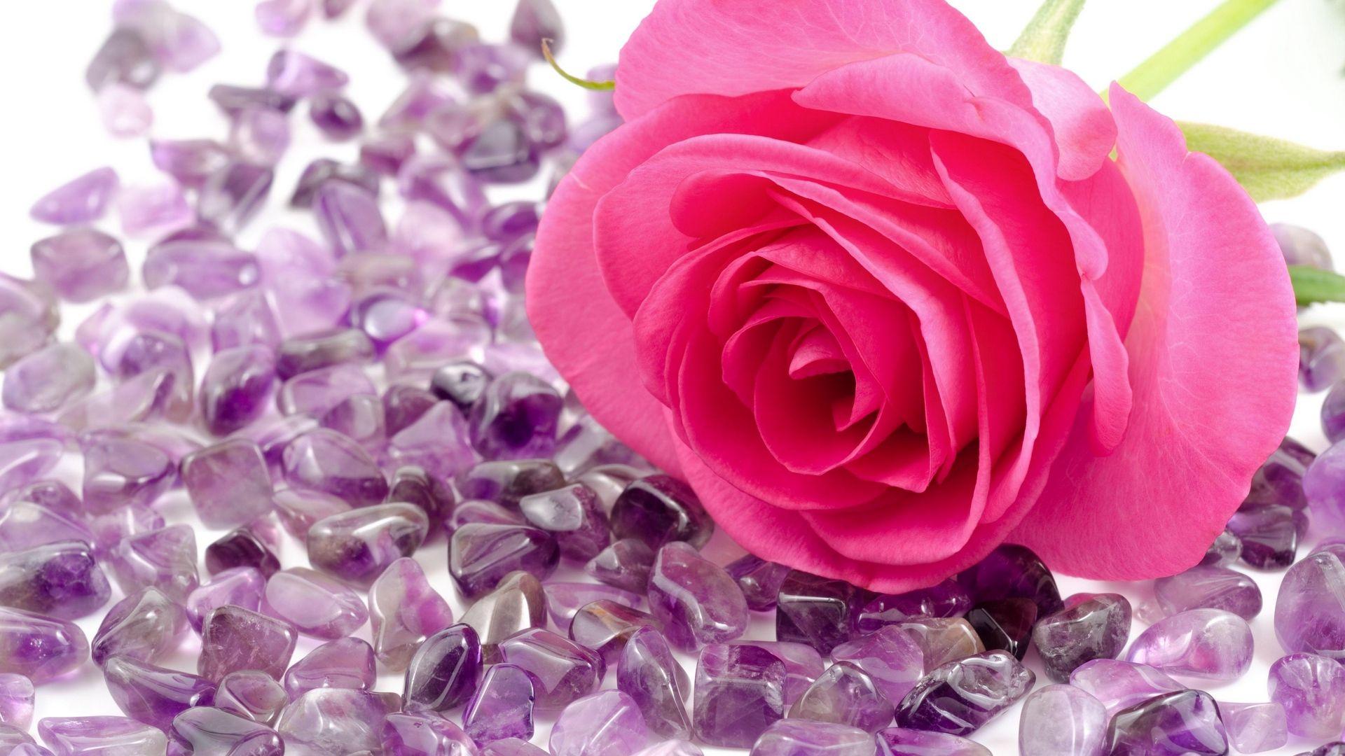 Beautiful Rose Download Wallpaper
