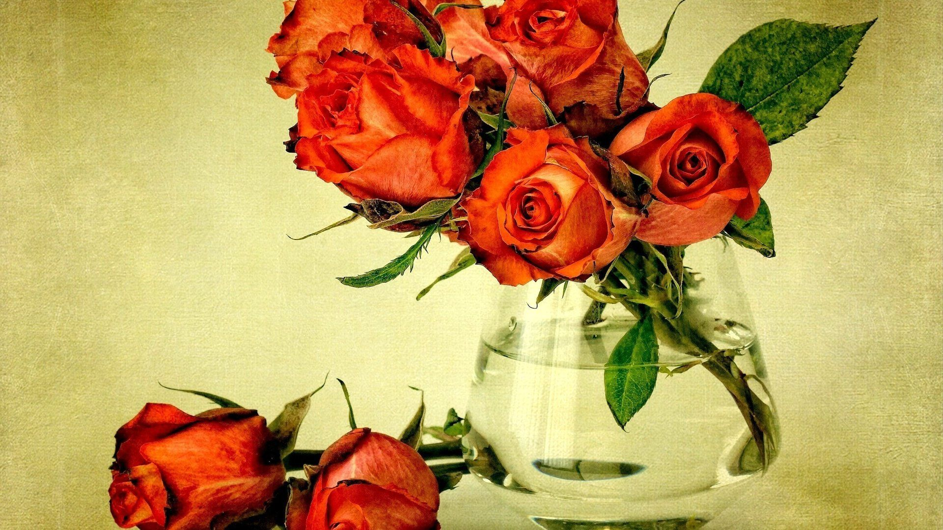 Beautiful Rose Picture
