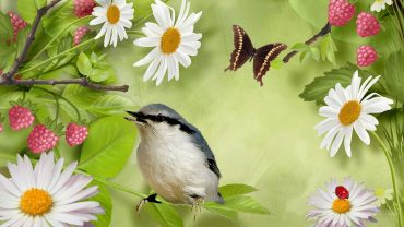 Bird And Butterfly Picture