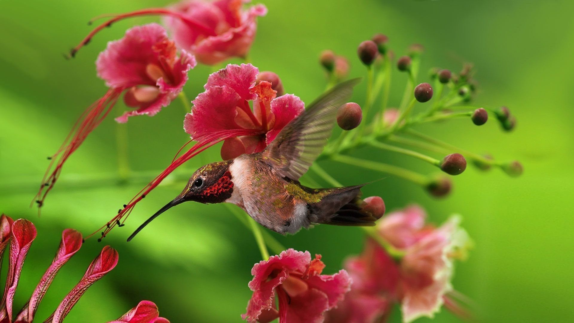 Bird And Butterfly Full HD Wallpaper
