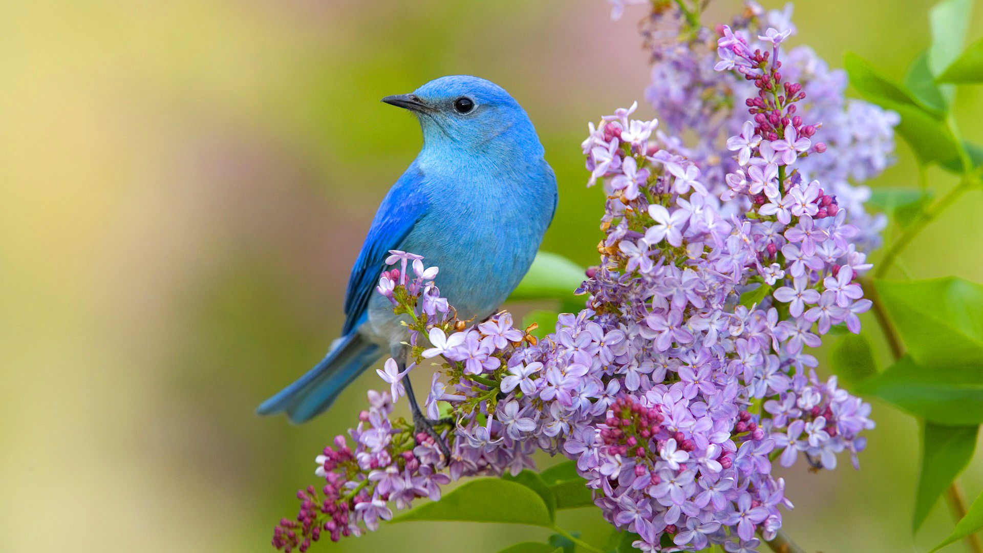 Bird And Butterfly download wallpaper image