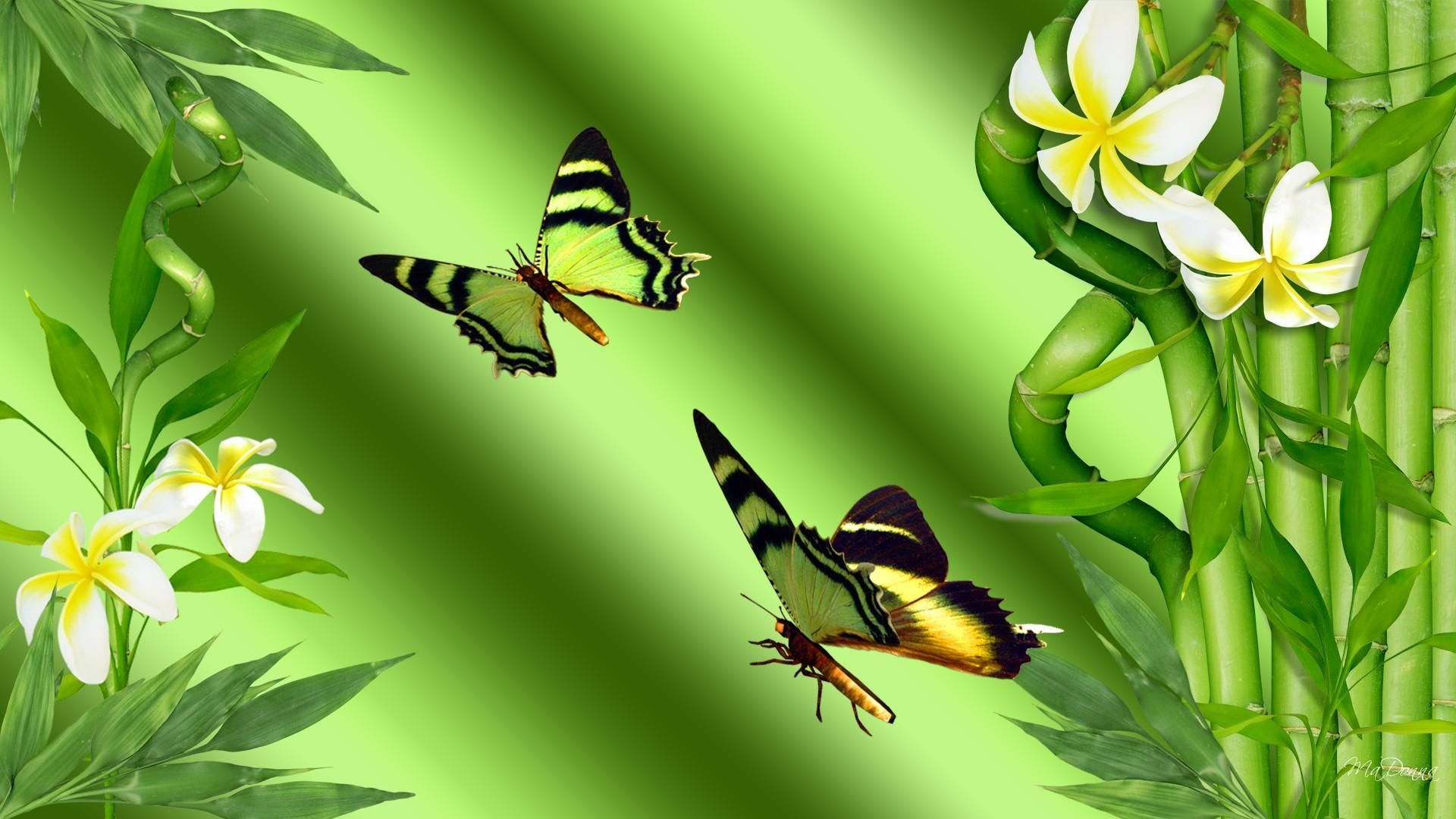 Bird And Butterfly HD Download