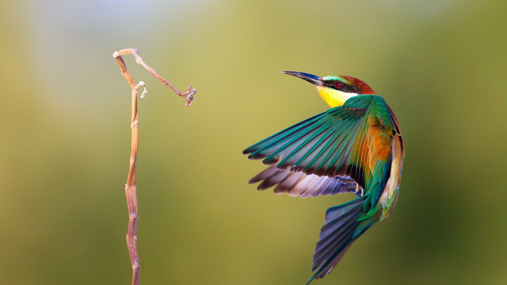 Bird And Butterfly download nice wallpaper