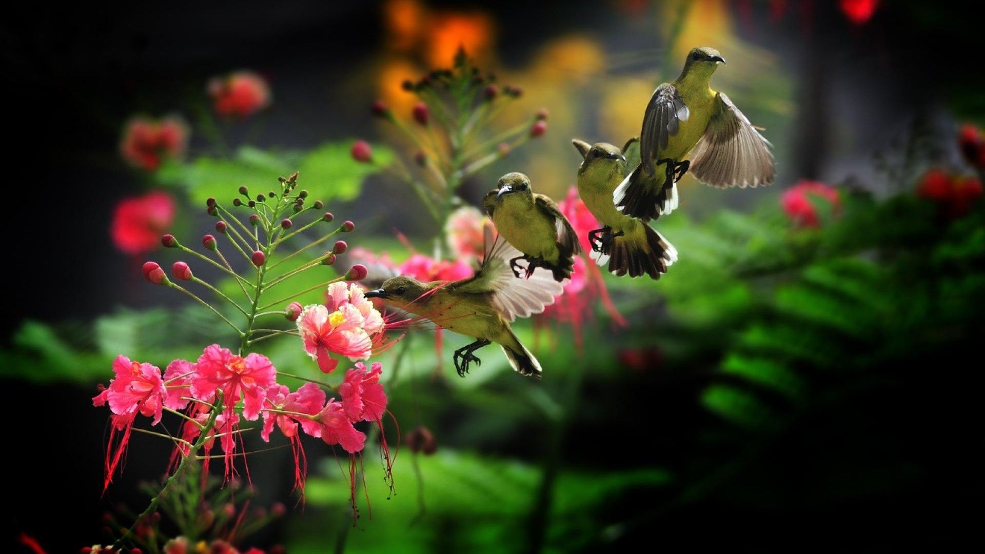 Bird And Butterfly HD 1080 wallpaper