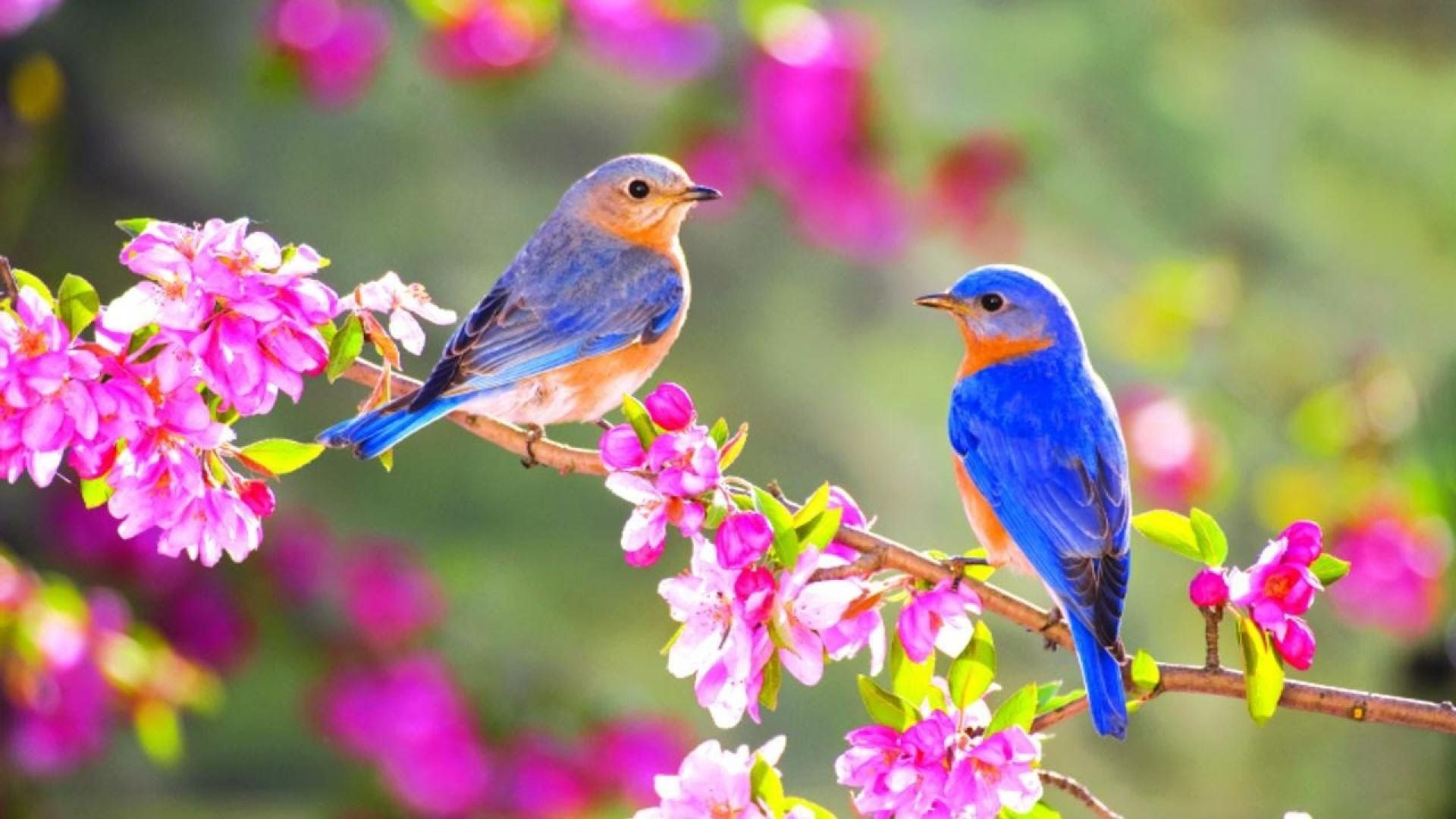 Bird And Butterfly Free Wallpaper